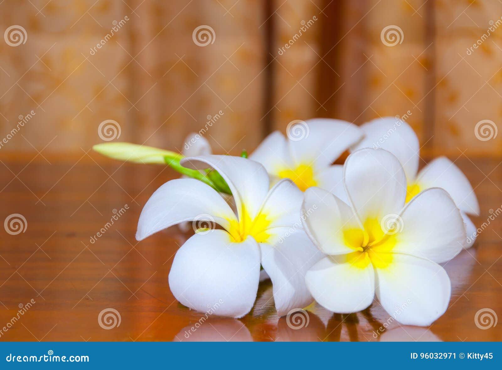 Białe Plumeria Pudica flory