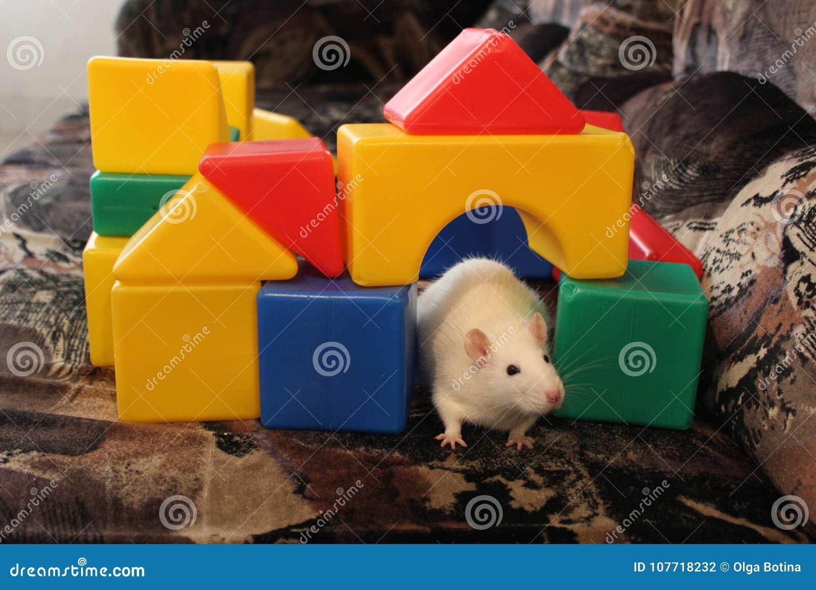 Białe zabawki i szczur