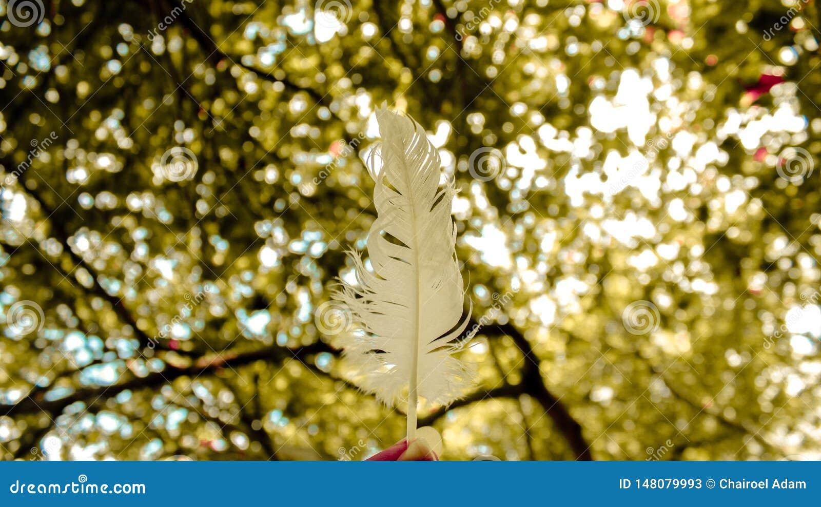 Białego łabędź piórkowy i zamazany drzewny tło