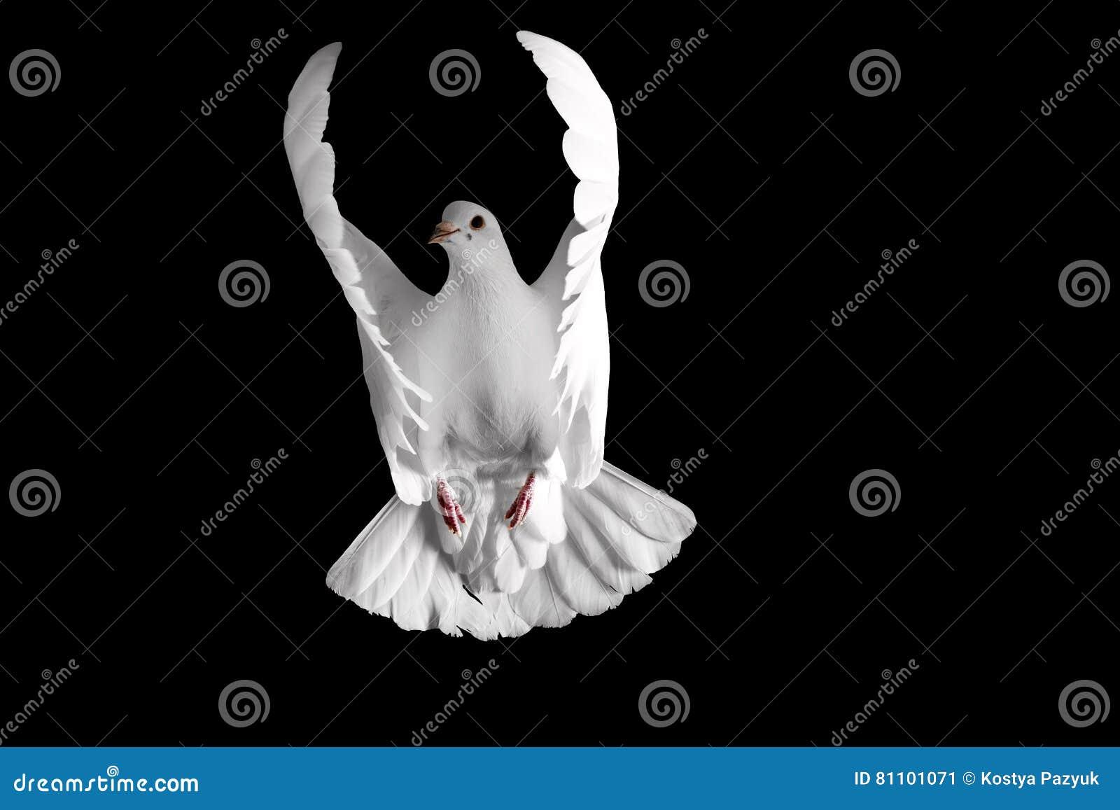 Biały gołąbki latanie na czarnym tle