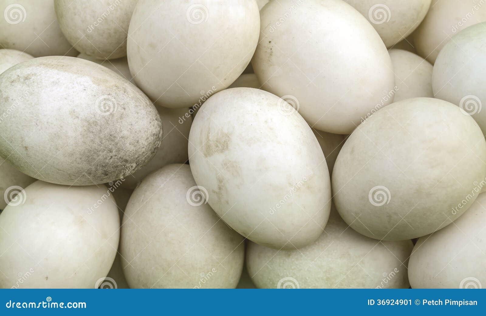 Biały jajko