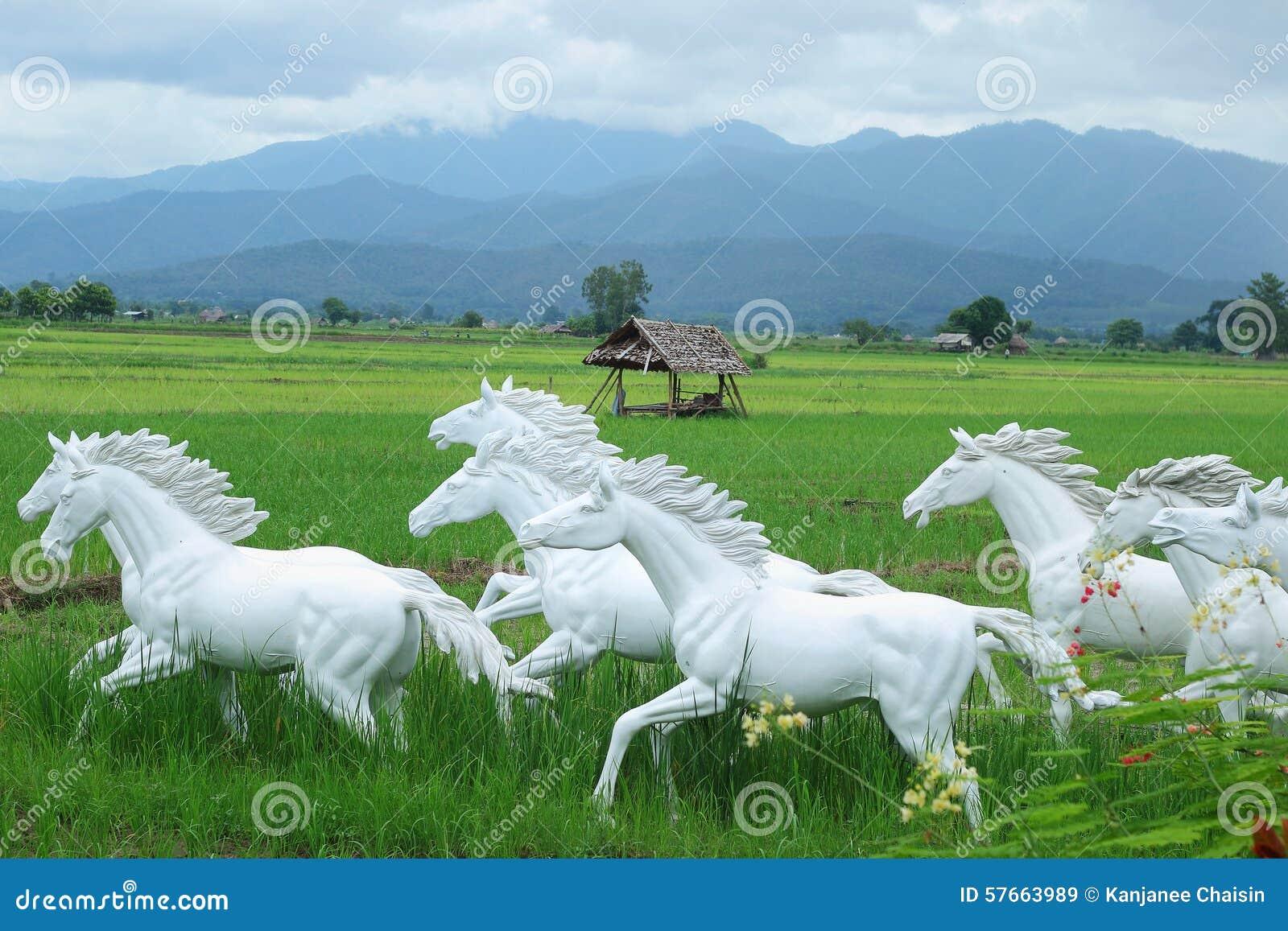 Biały koń w ryżowych polach