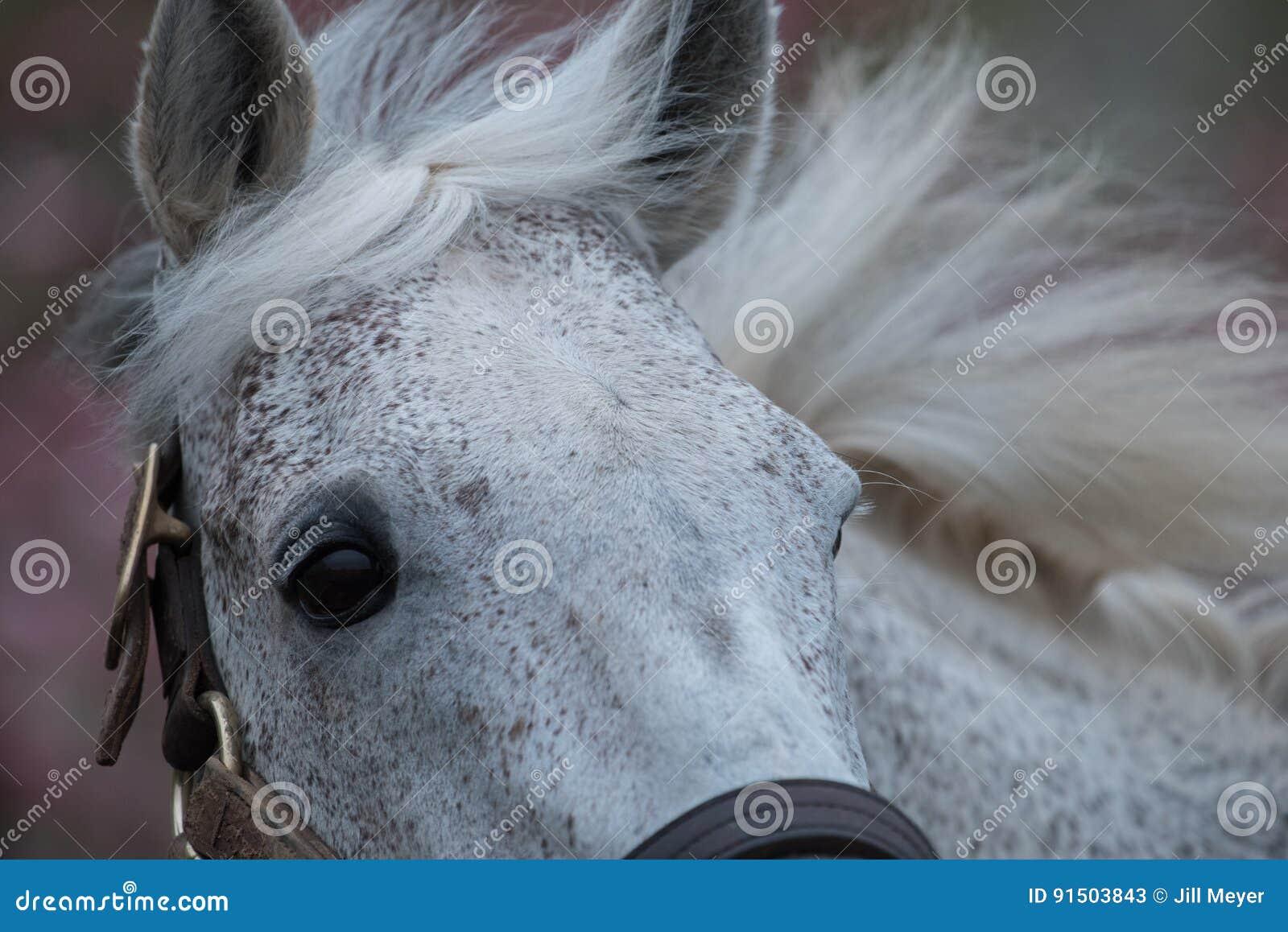 Biały koń wyścigowy