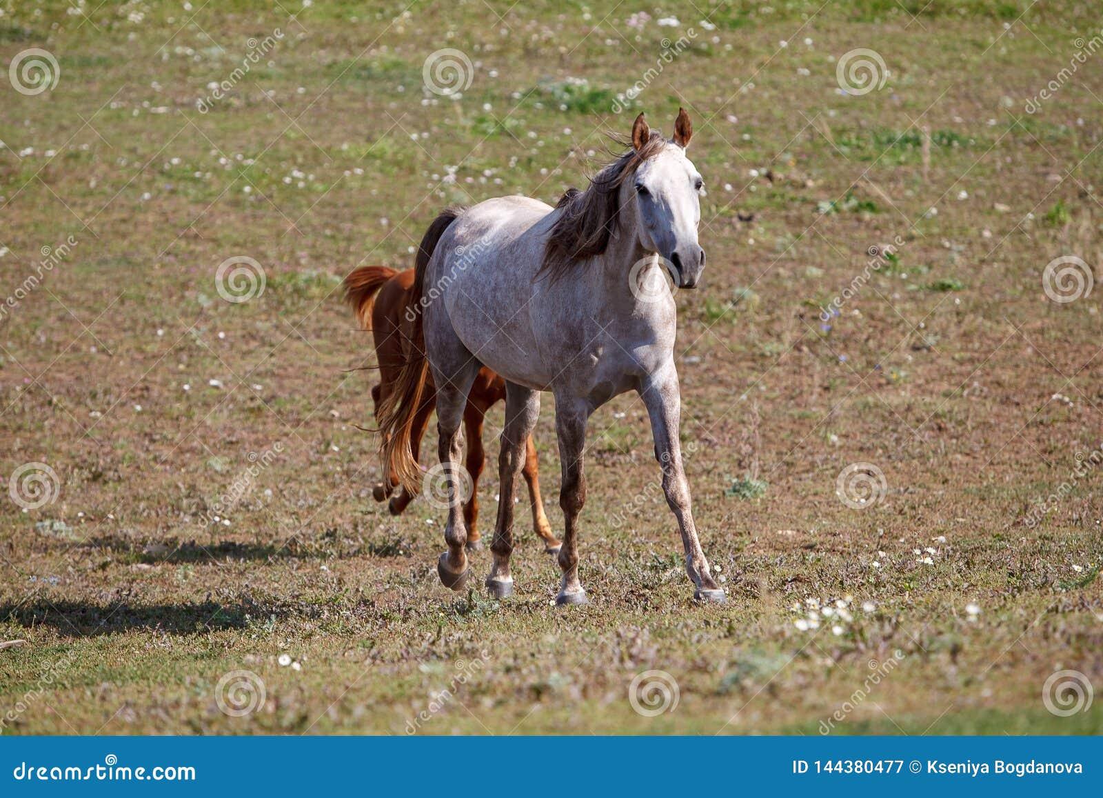 Biały koń z źrebięciem w paśniku