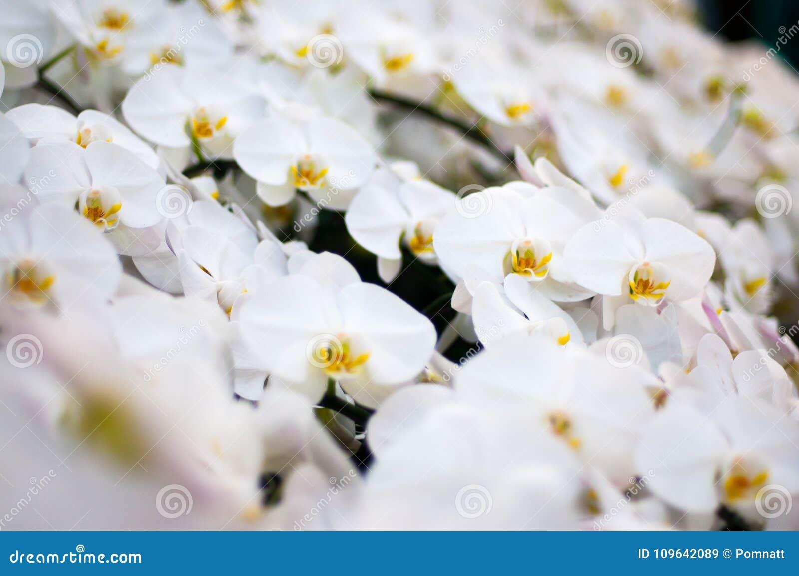 Biały kwiat i koloru żółtego pollen