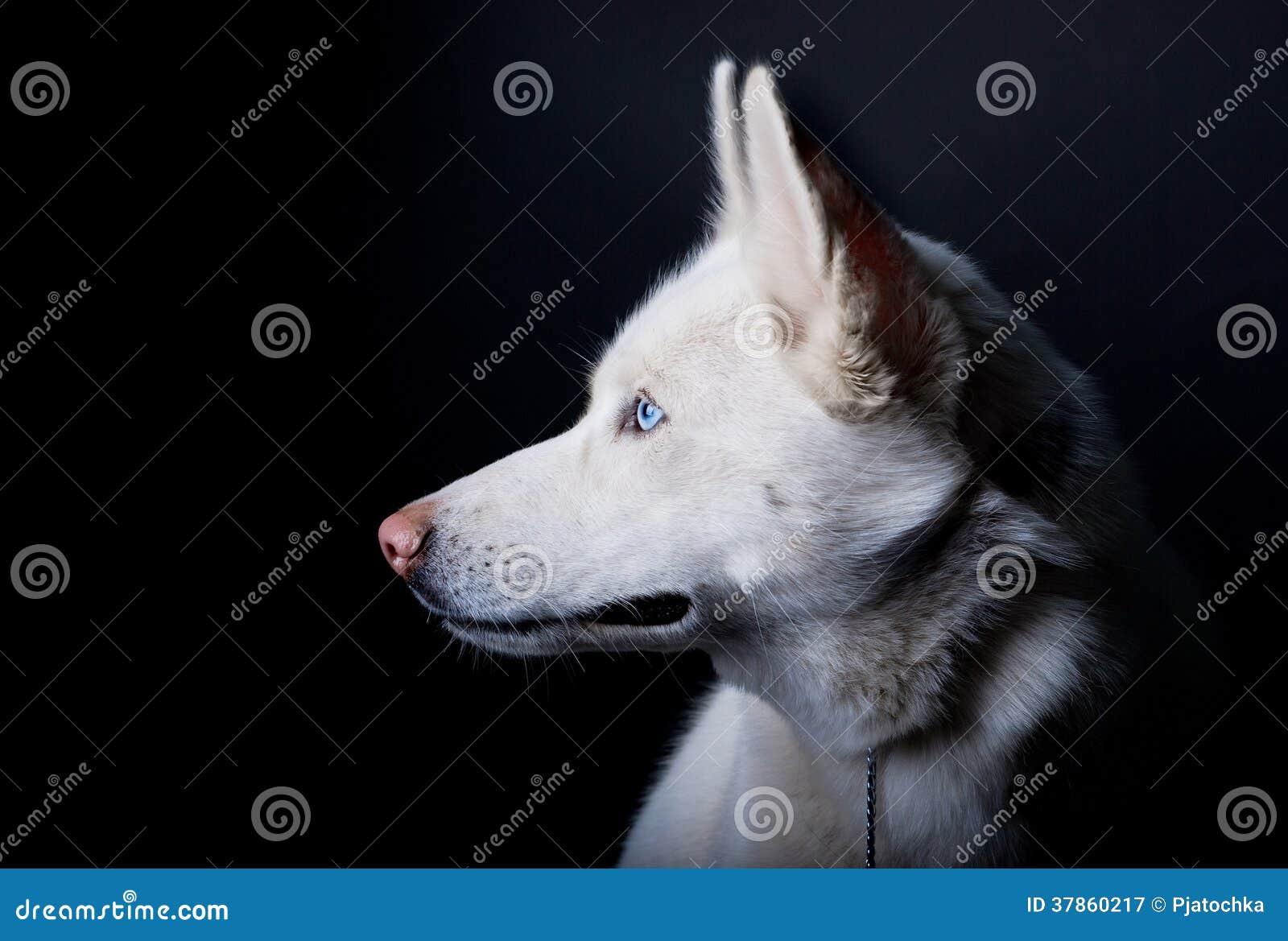 Biały layka