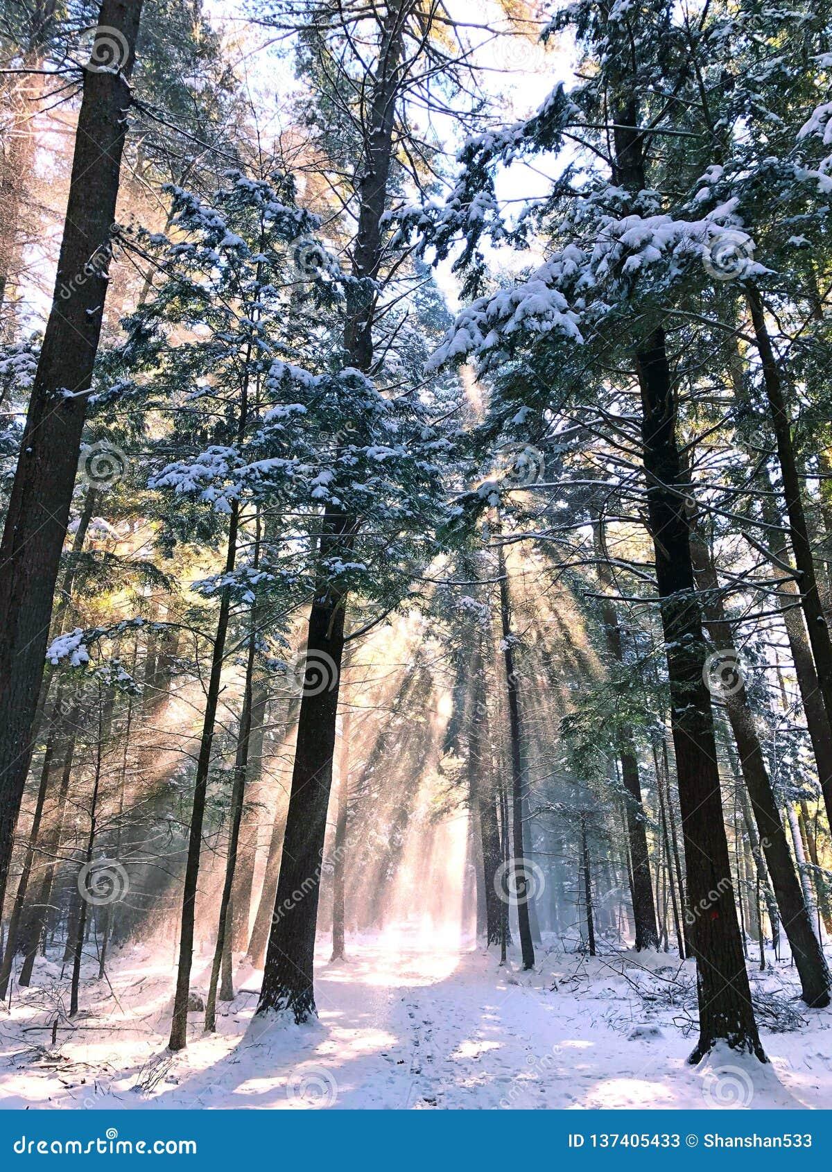Biały pamiątkowy konserwacja terenu las