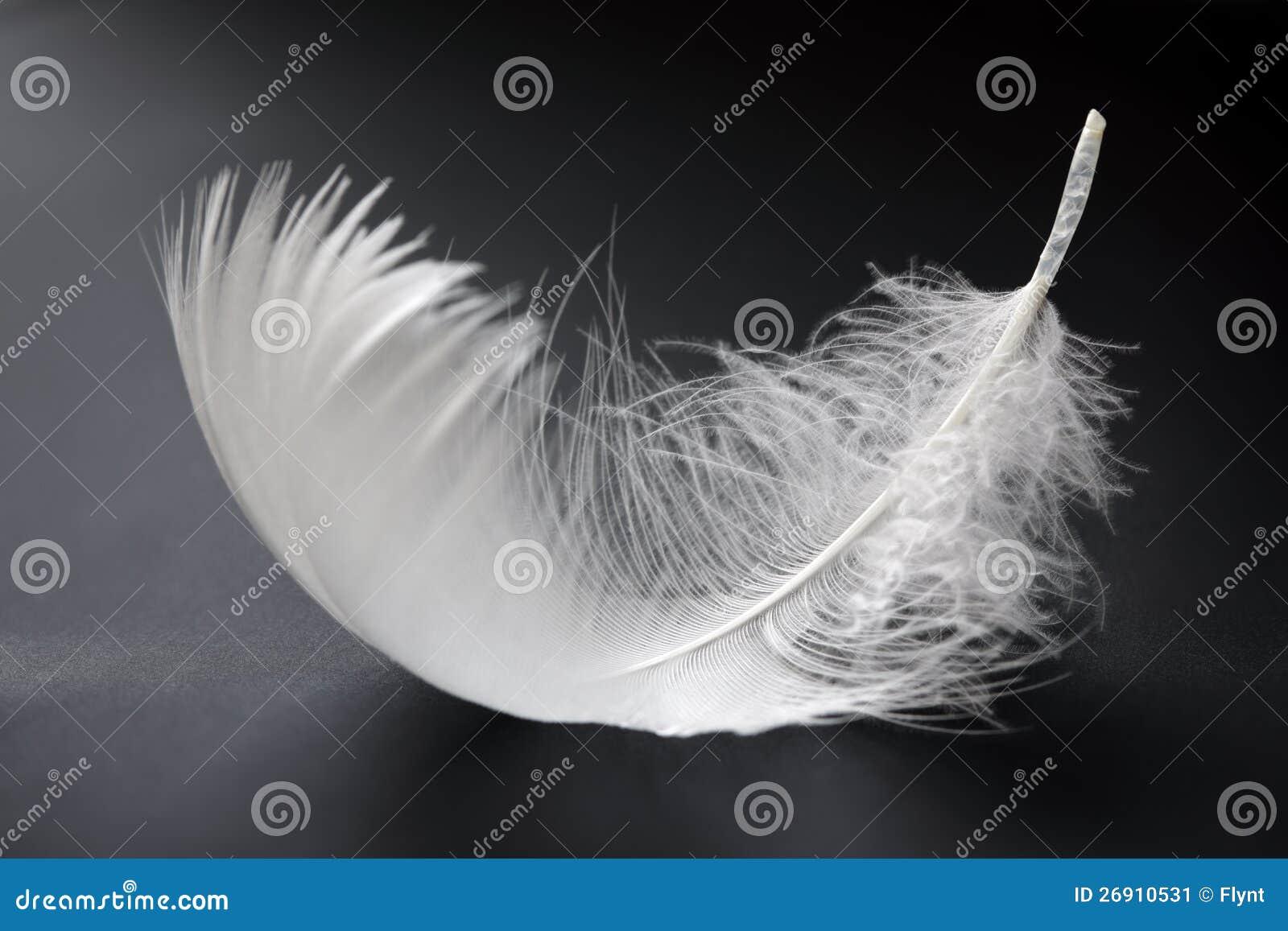 Biały piórko