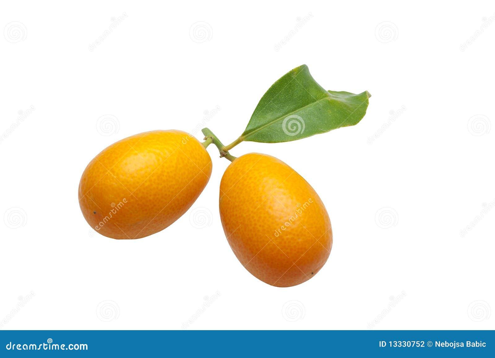 Biały tło kumquats