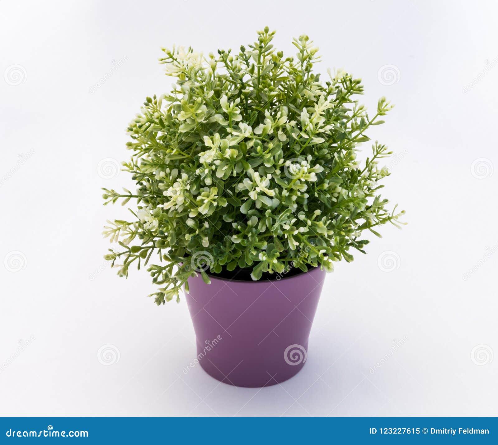 Biały - zielony plastikowy dekoracyjny kwiat w fiołkowym plastikowym garnku jest na białym tle