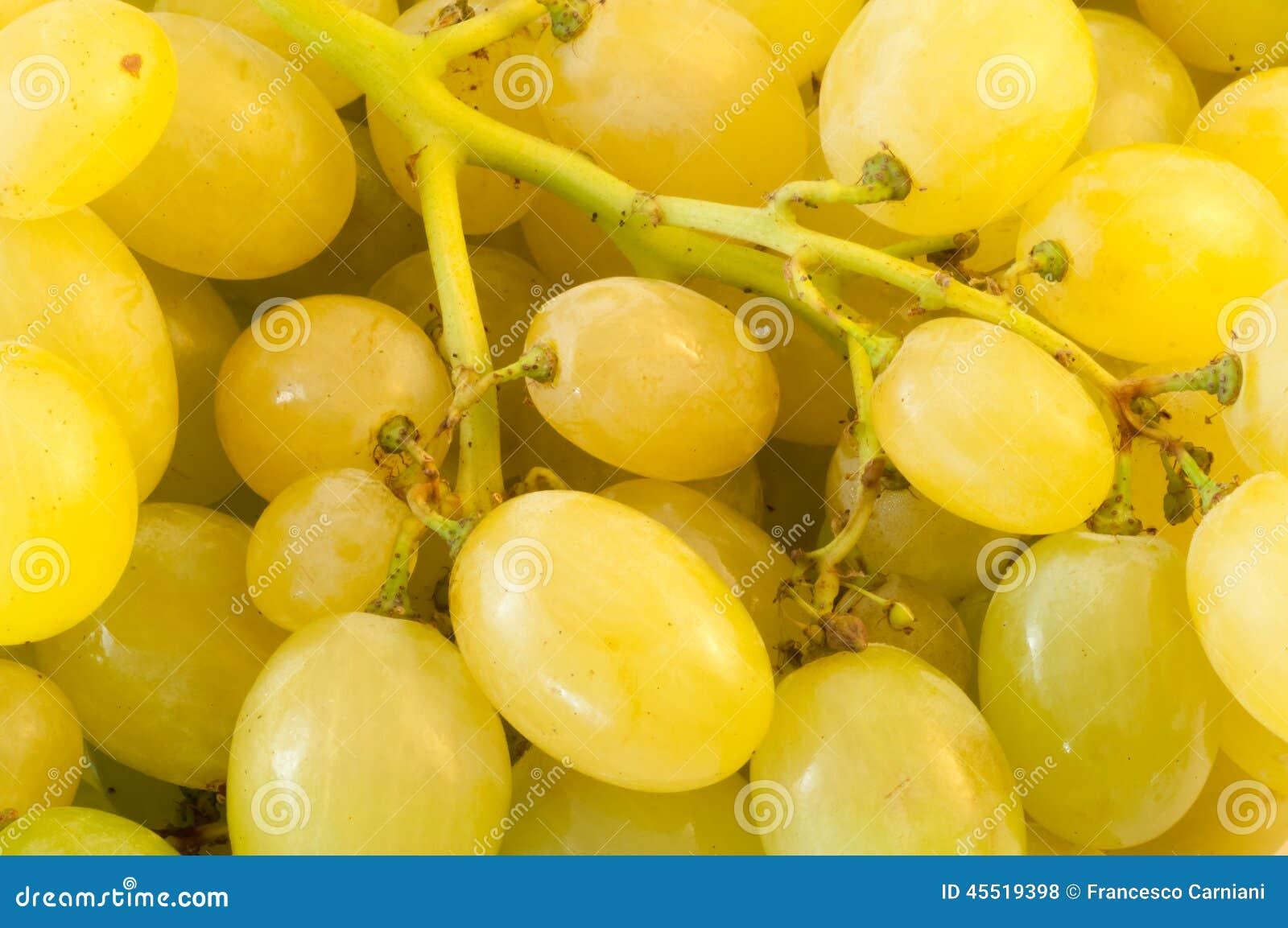 Białych winogron