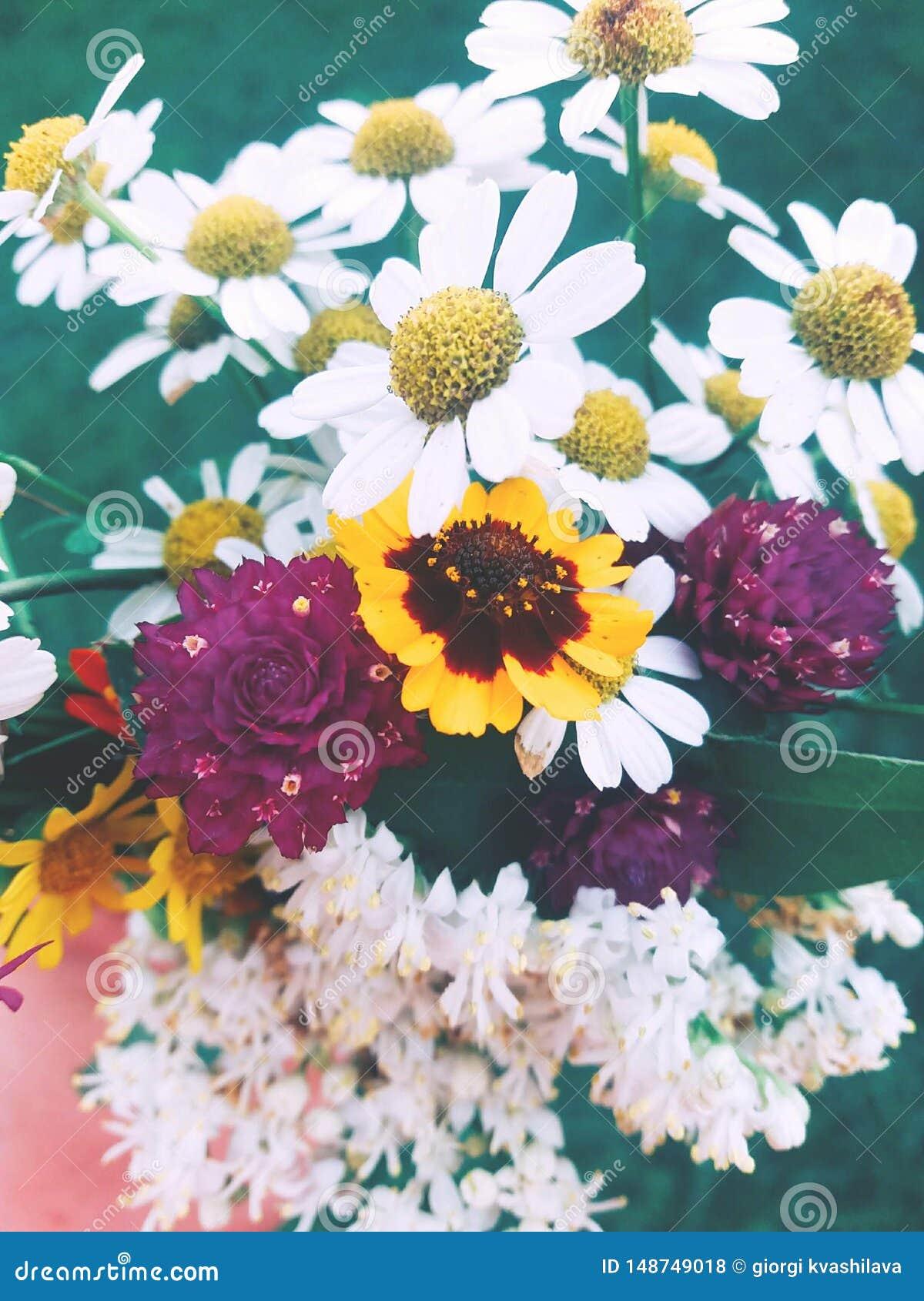 Bia?e kwiaty