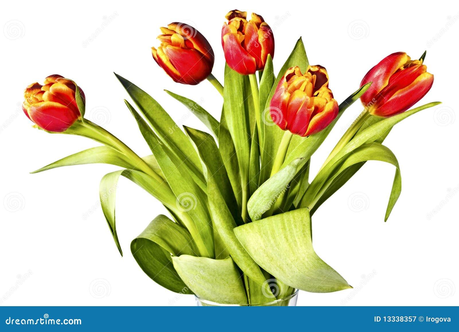Biały jaskrawy bukietów tulipany