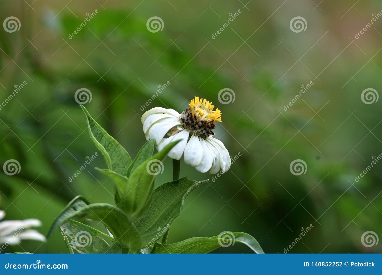 Biali kwiaty które kwitną w dżdżystym