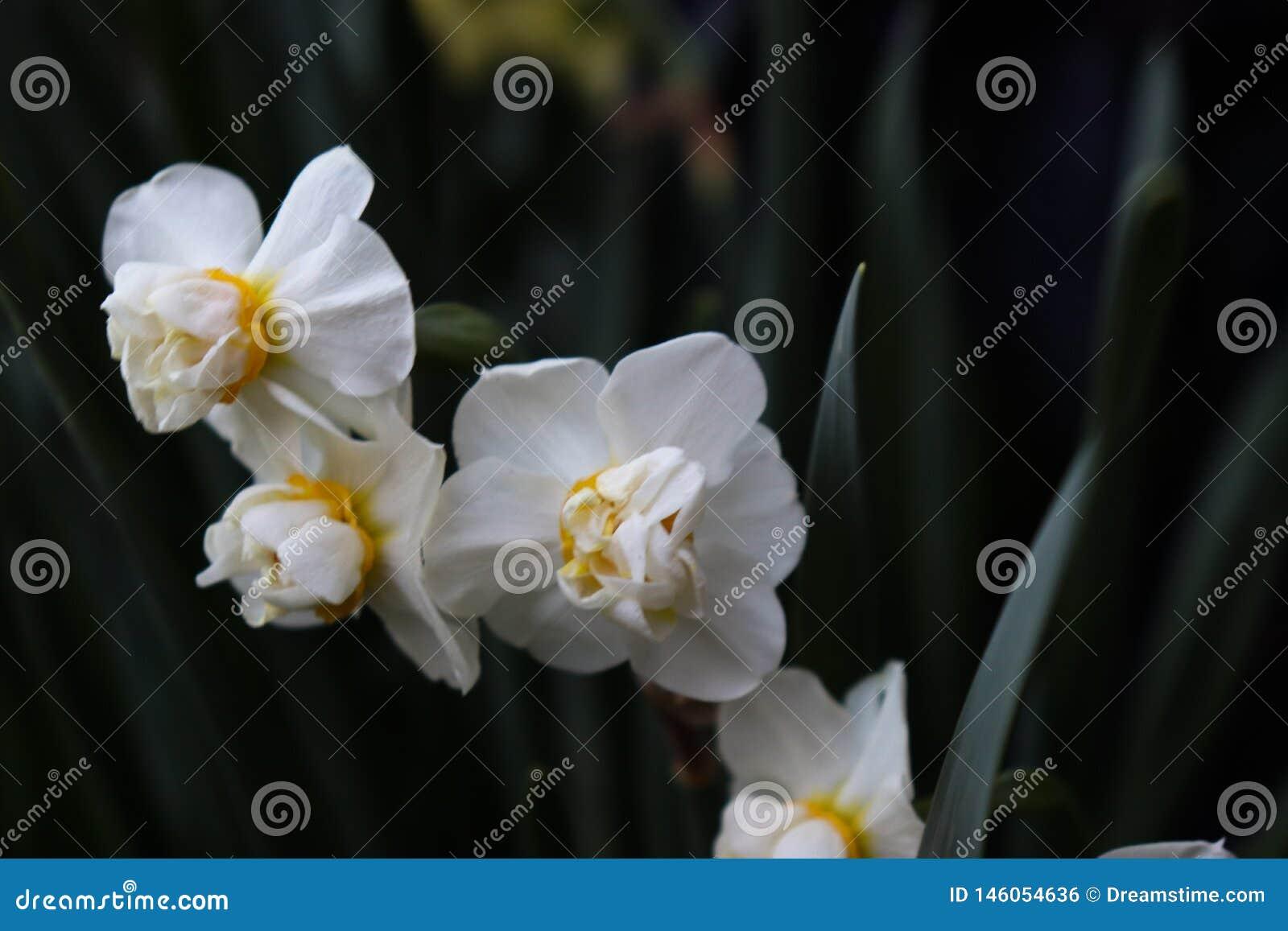 Biali kwiaty z zieleni gałąź