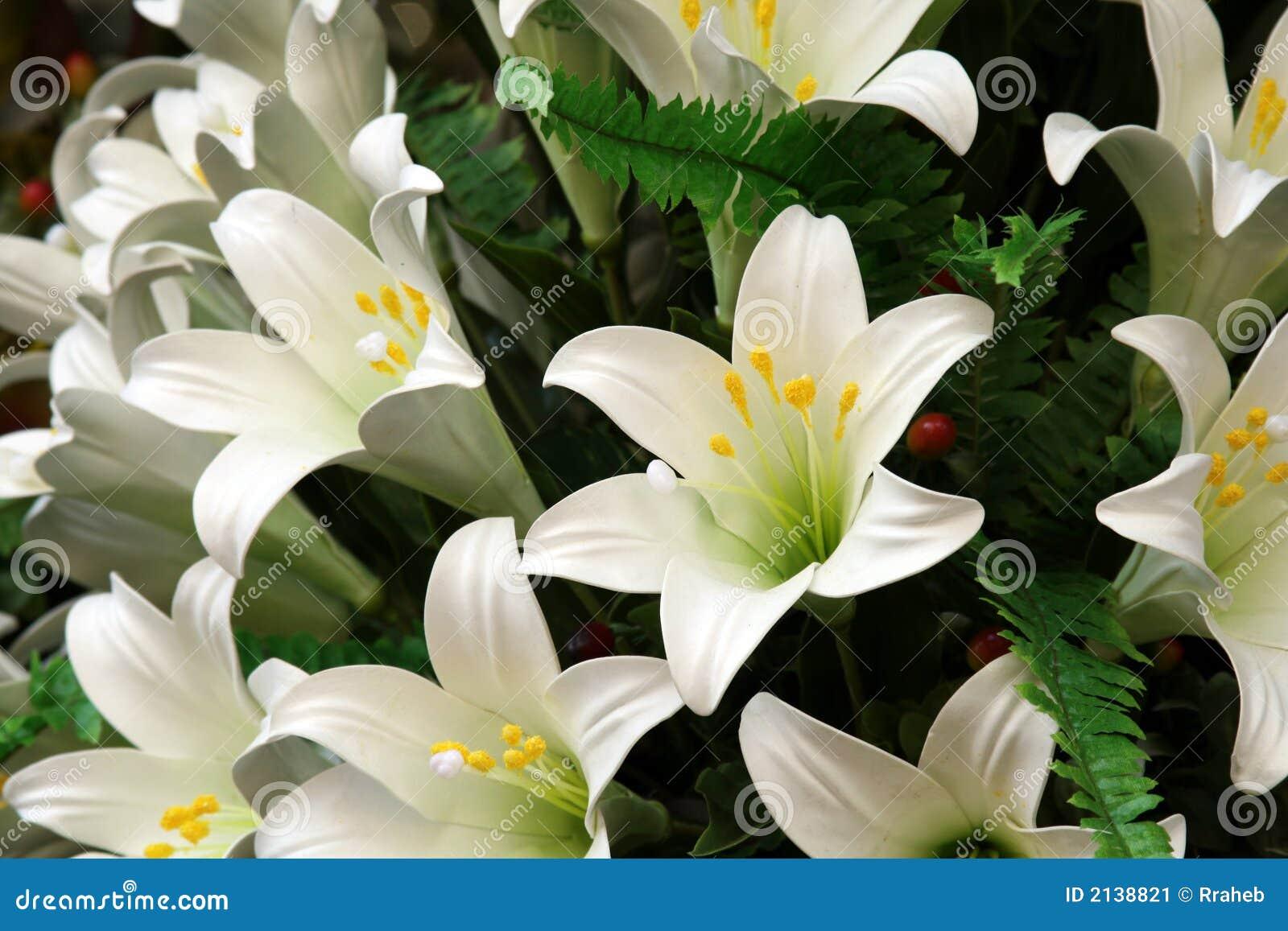 Biali lillies