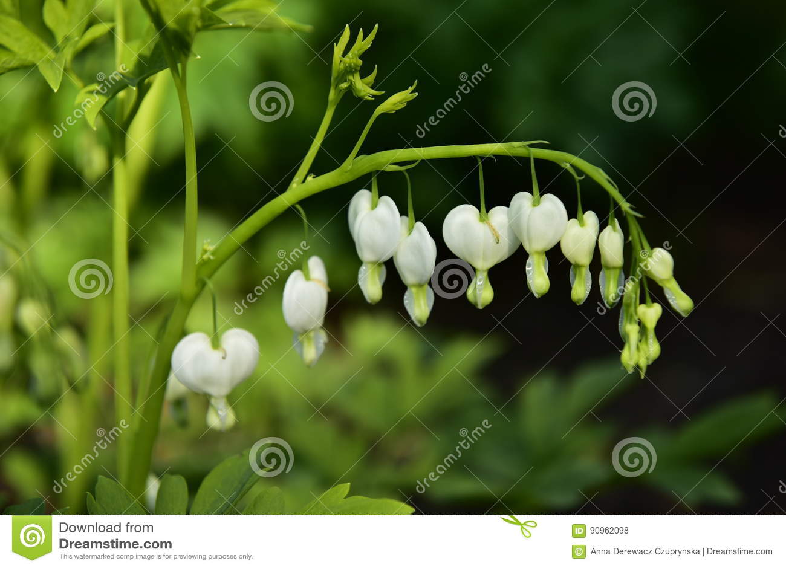 Biali serce kwiaty