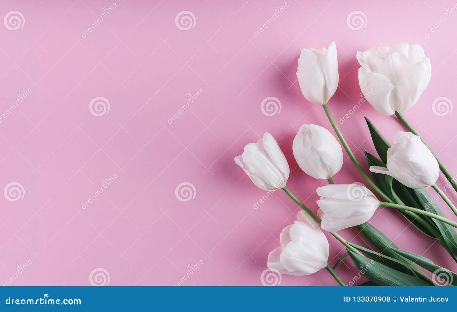 Biali tulipany kwitną nad światłem - różowy tło Kartka z pozdrowieniami lub ślubny zaproszenie