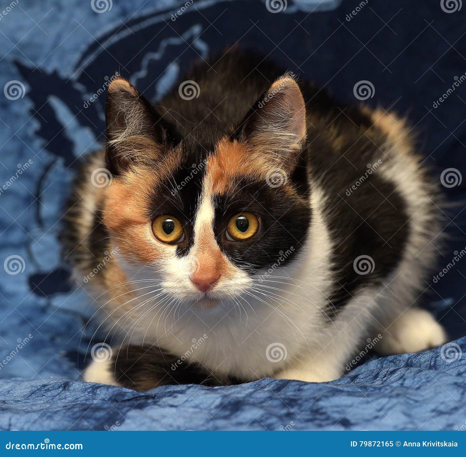 Bianco Con Il Gatto Nero E Rosso Immagine Stock Immagine Di