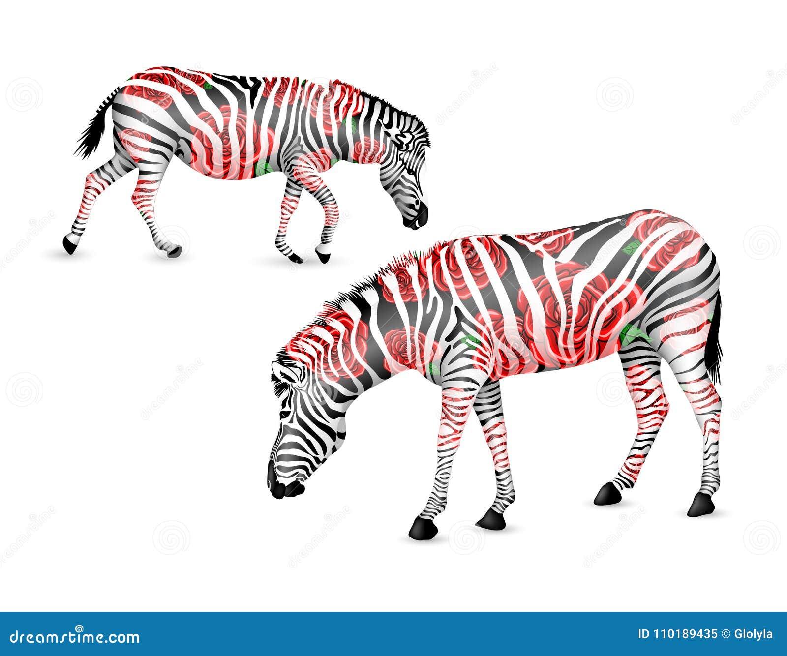 In bianco e nero a strisce della zebra con le rose rosse