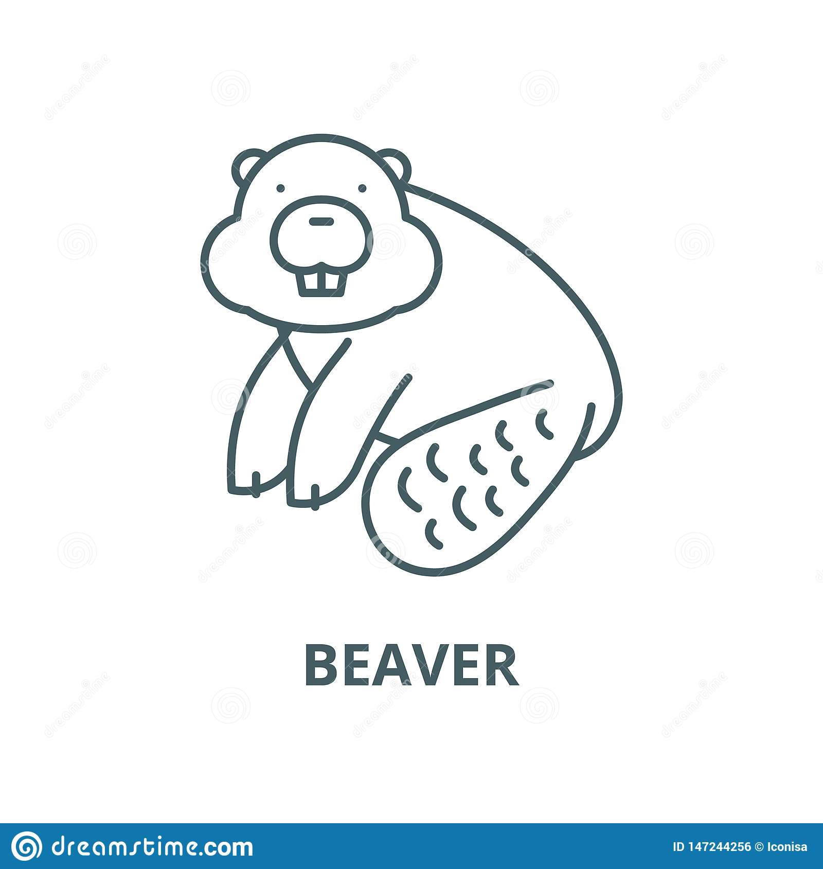 Bibervektorlinie Ikone, lineares Konzept, Entwurfszeichen, Symbol