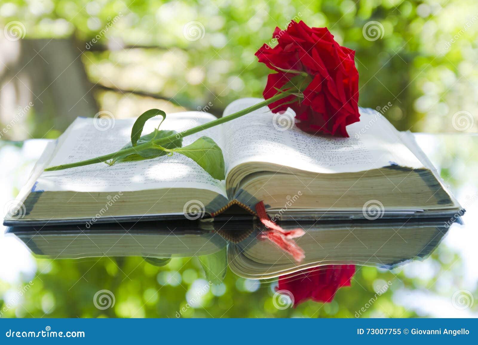 Biblia que brilla intensamente abierta en naturaleza