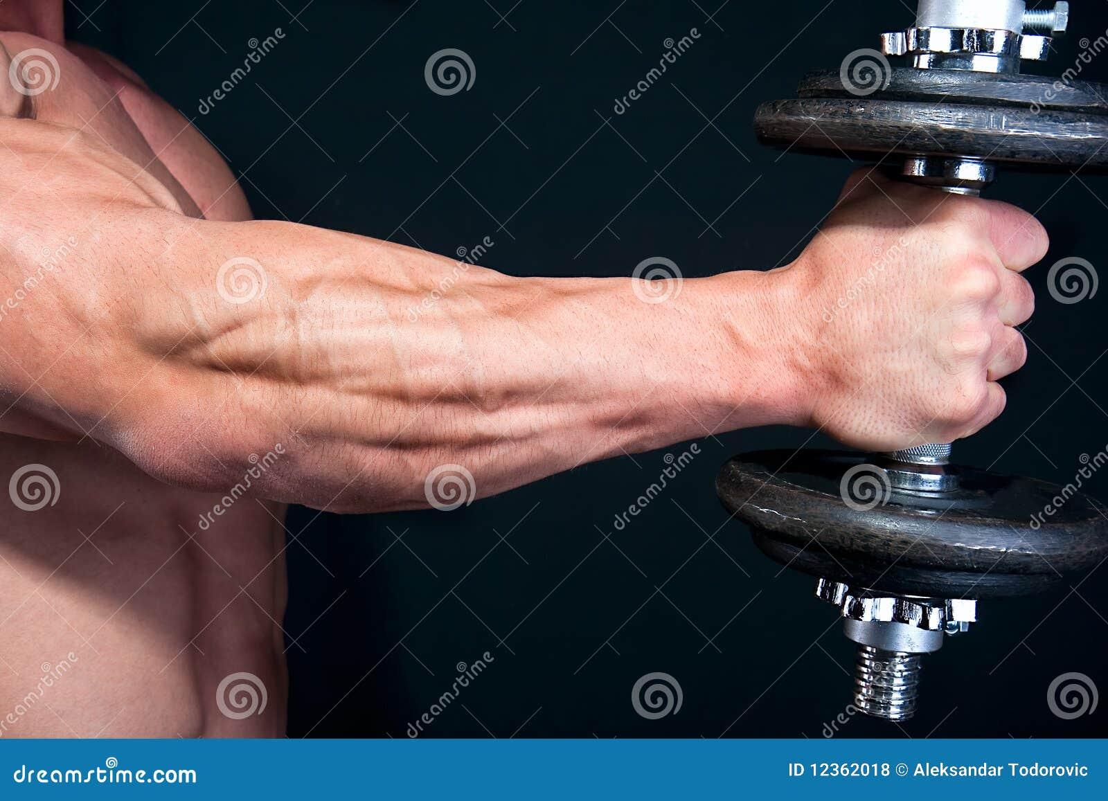 Bicep mit Handgewicht