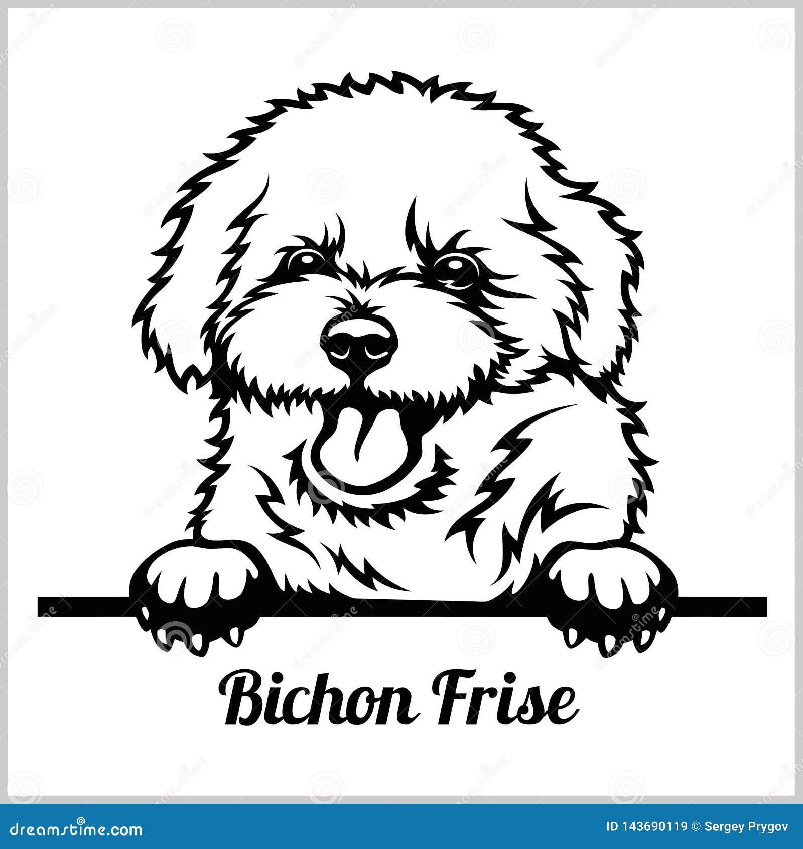 Bichon Frise Stock Illustrations 209 Bichon Frise Stock Illustrations Vectors Clipart Dreamstime