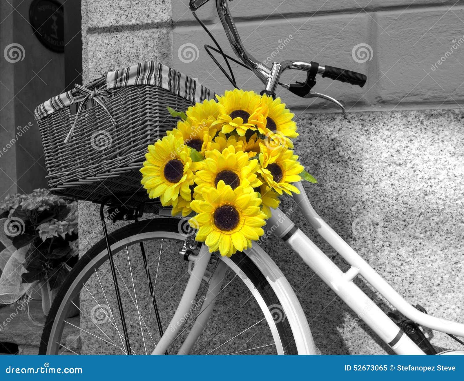 Bicicleta Adornada Con Los Girasoles Foto Blanco Y Negro De Pekín