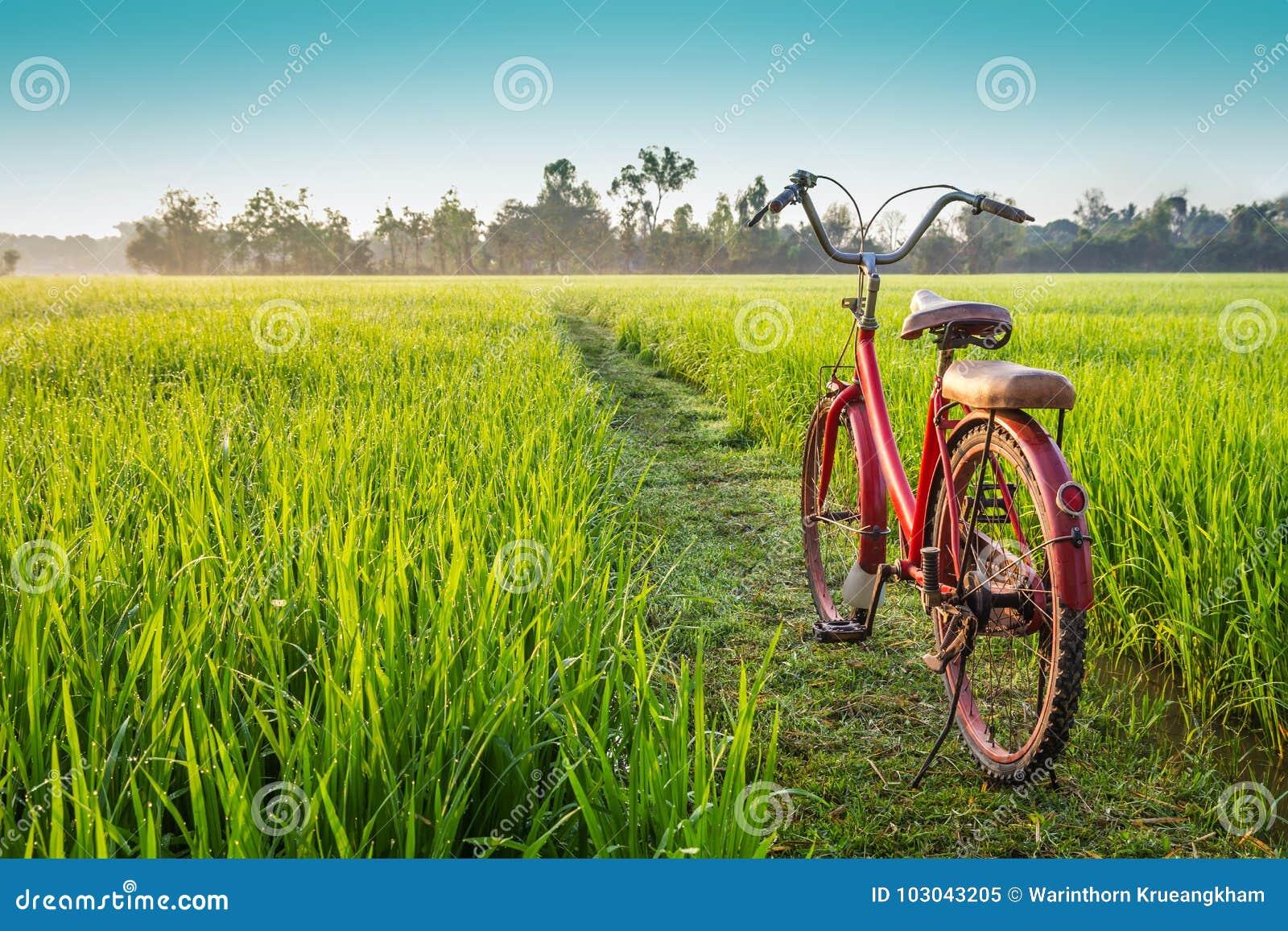 Bicicletta rossa con il fondo rurale di vista
