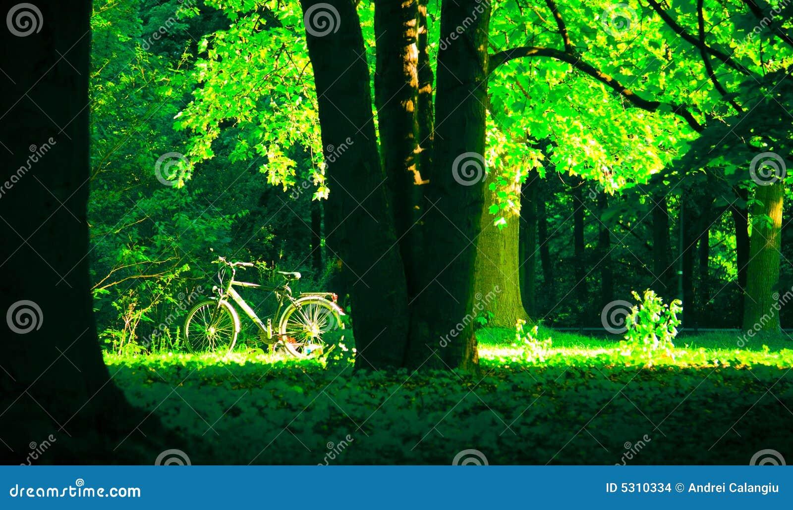 Download Bicicletta in sosta fotografia stock. Immagine di ambientale - 5310334