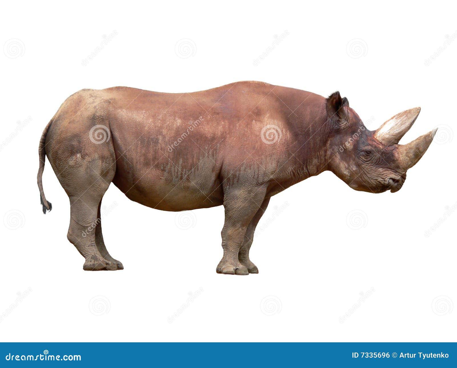 娘的黑bi_bicornis黑色黑犀属犀牛