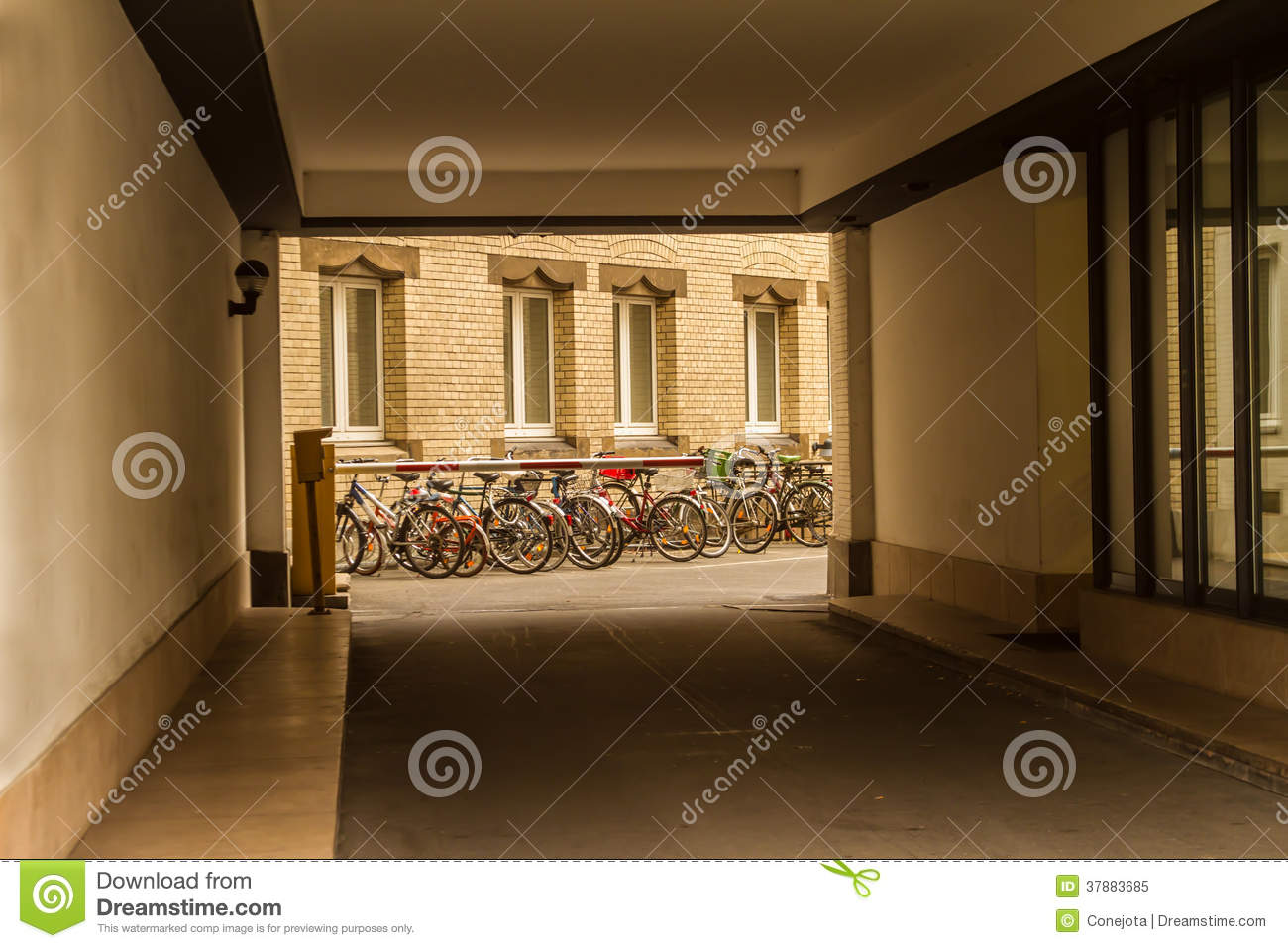 Bicycles in a backyard