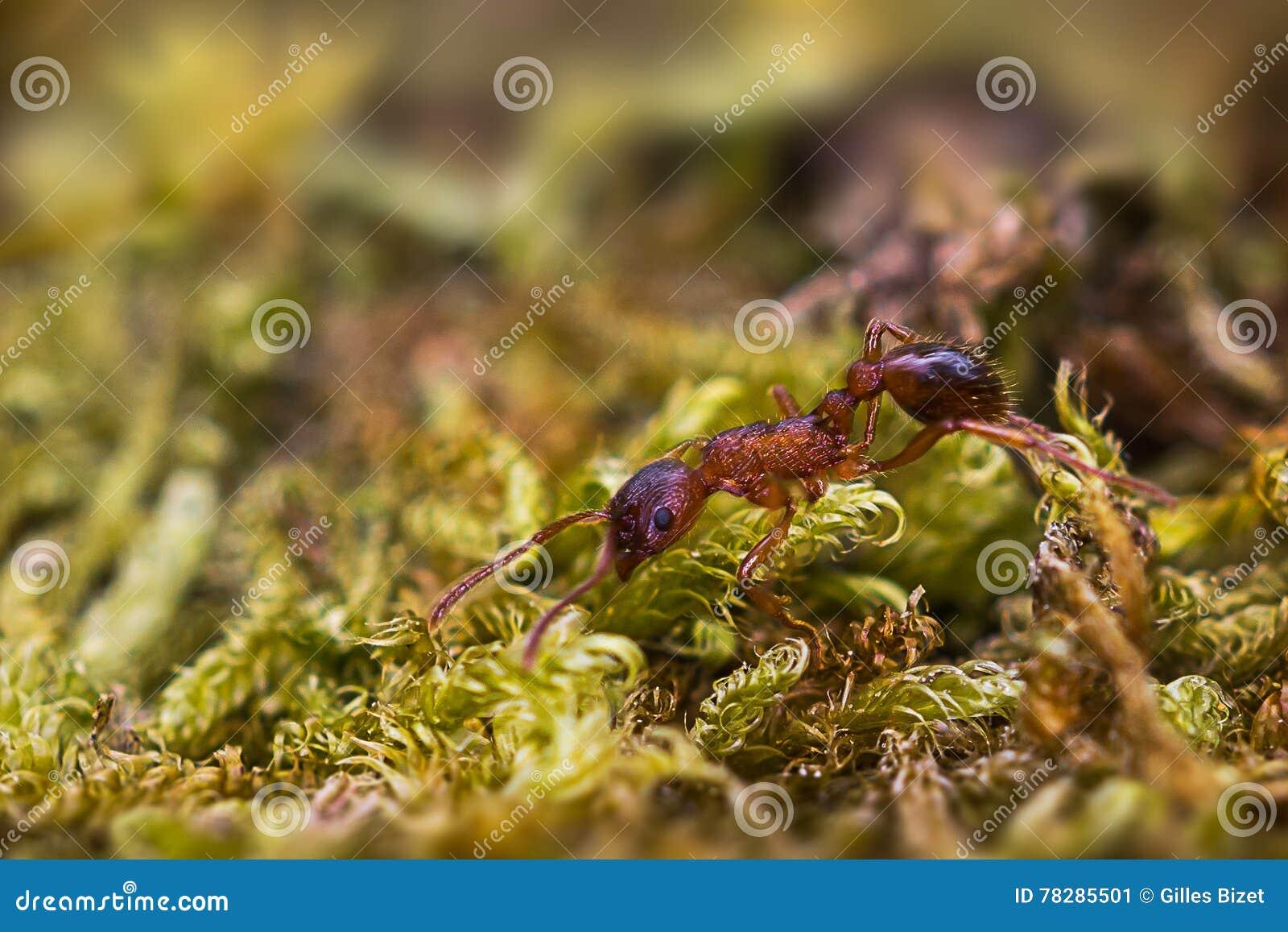 Biega mrówki
