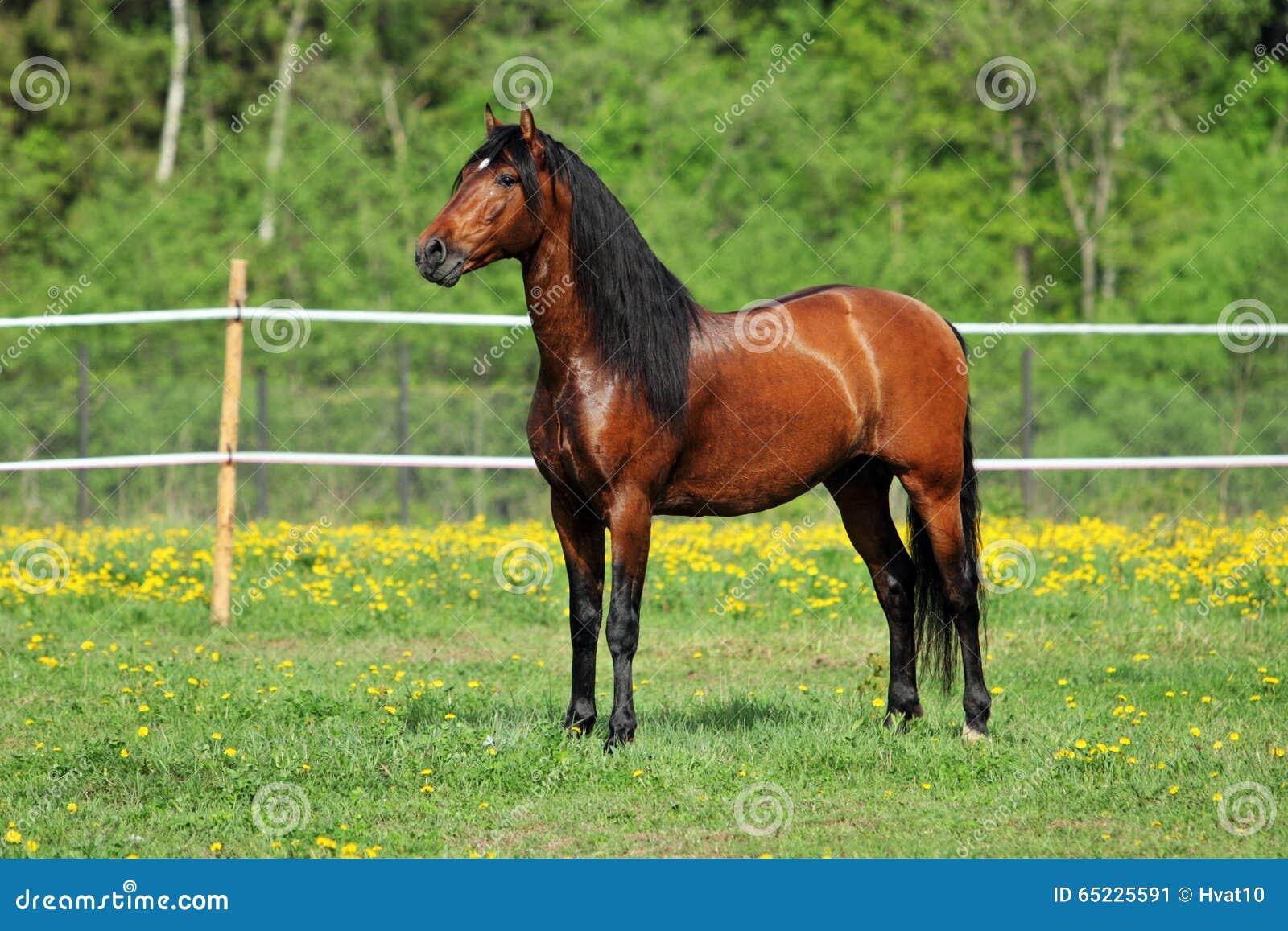 Biegowy koń na zielonej łące