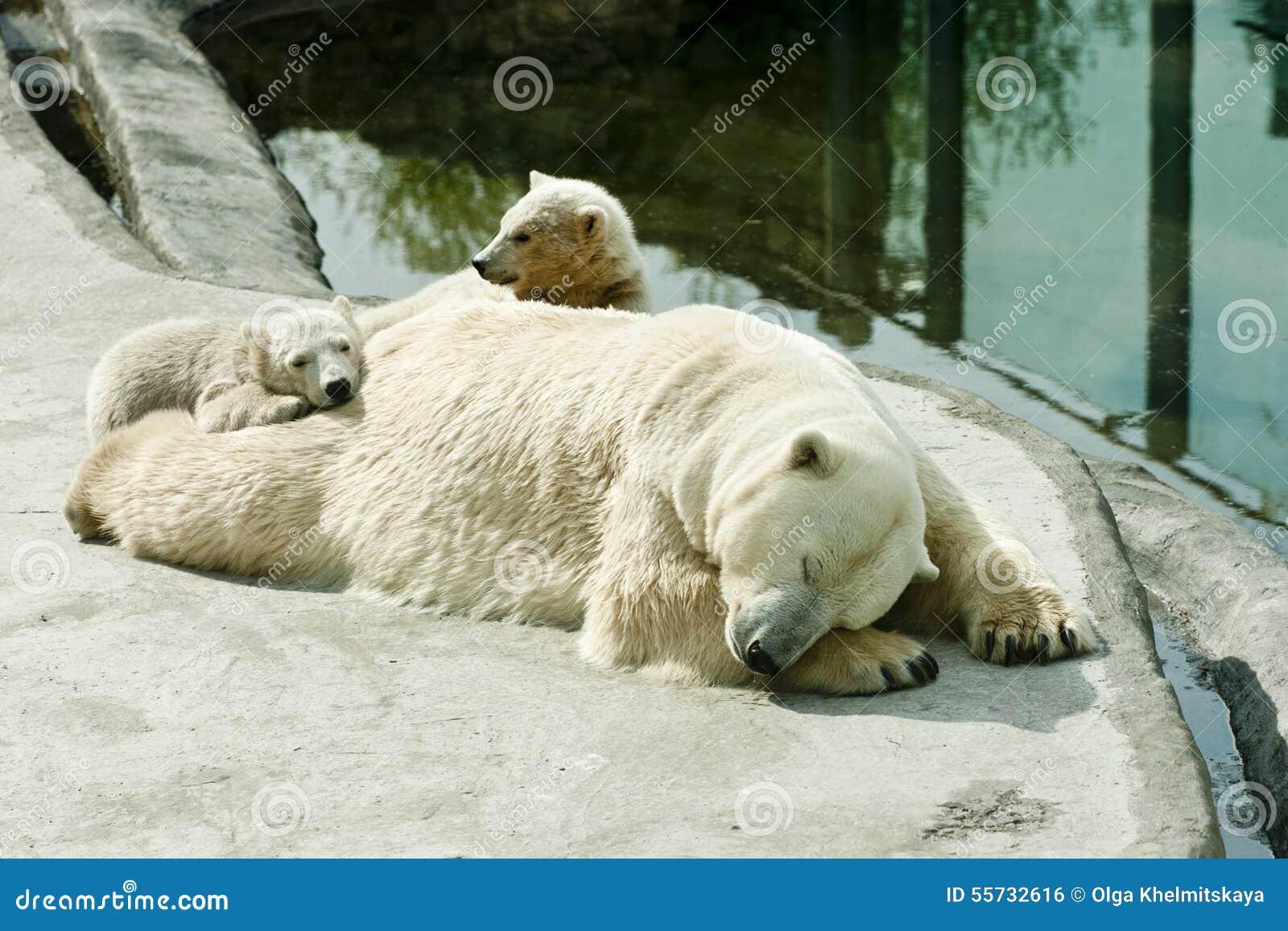 Biegunowy niedźwiedź z lisiątko sen