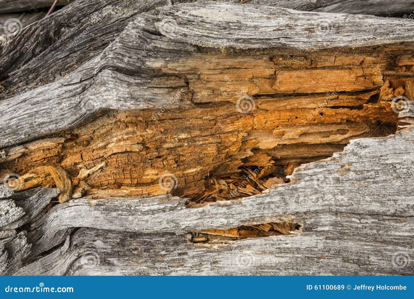 Bielący driftwood z pomarańcze centrum roztrzaskany drewno, Flagst