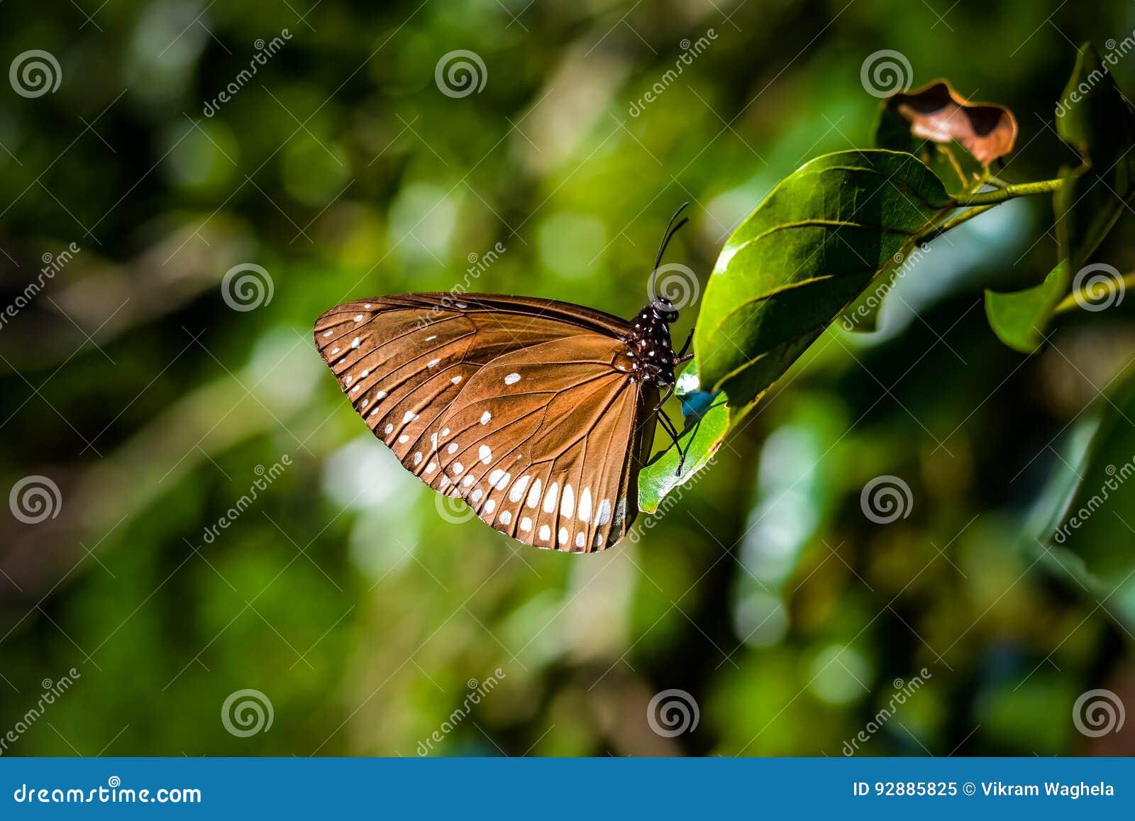 Biel motyla odosobniony biel
