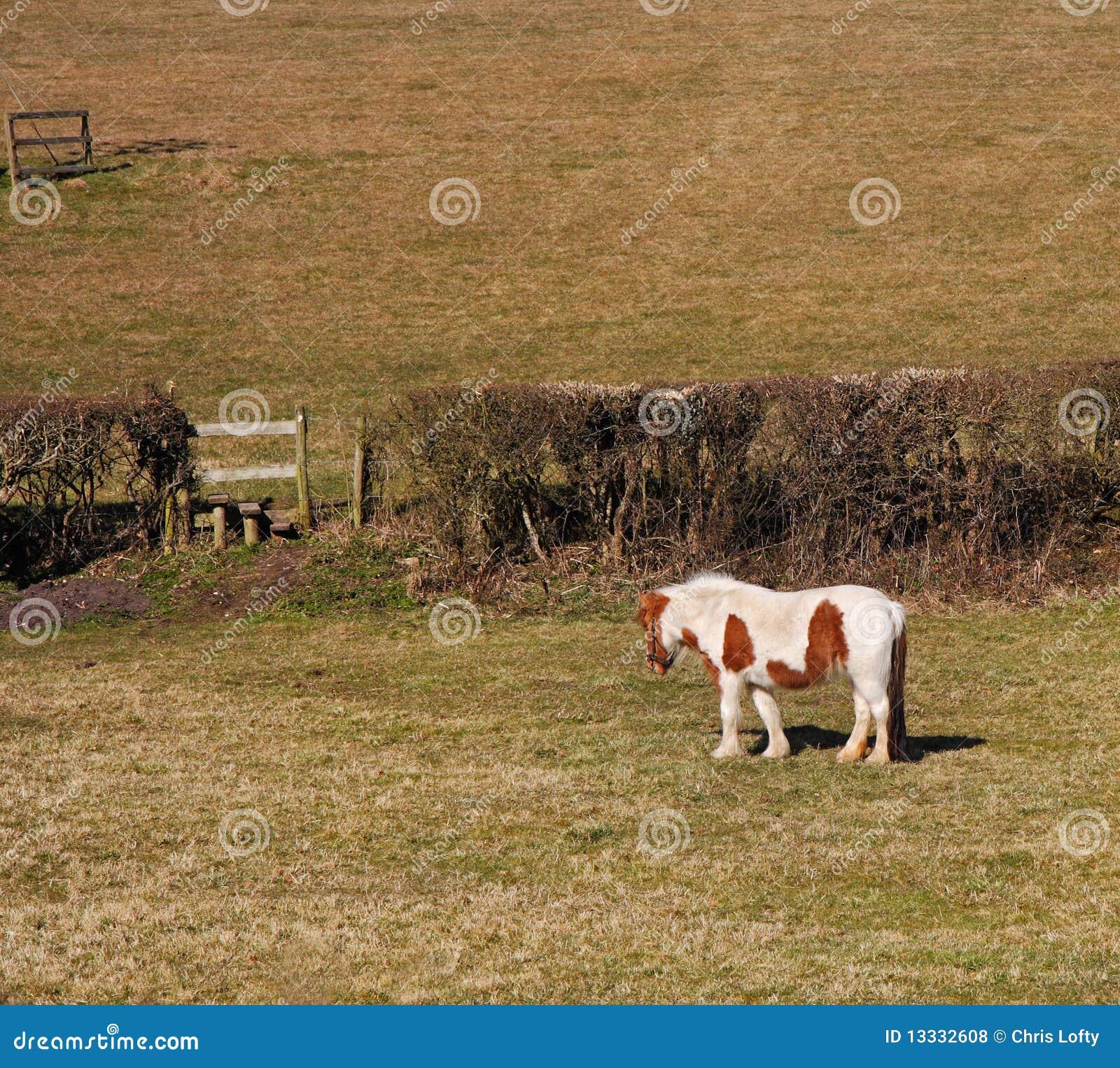 Biel pastwiskowy koński biel