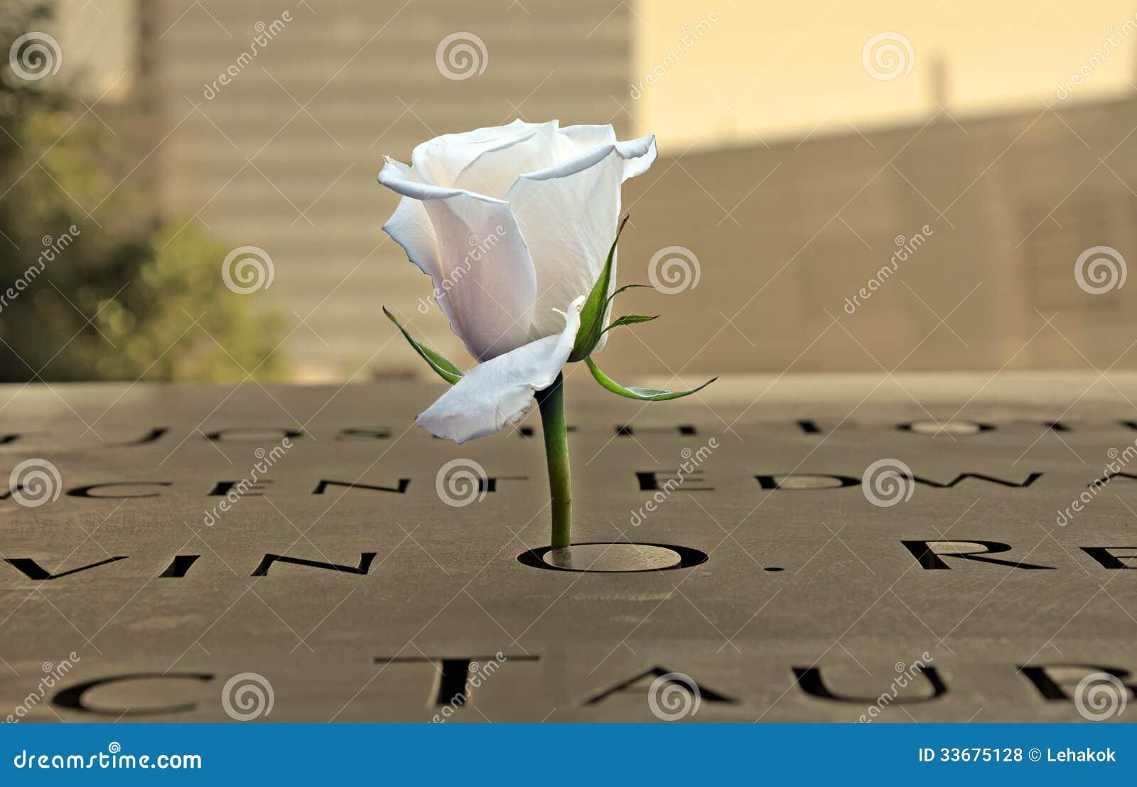 Biel róża przy 9-11 pomnikiem