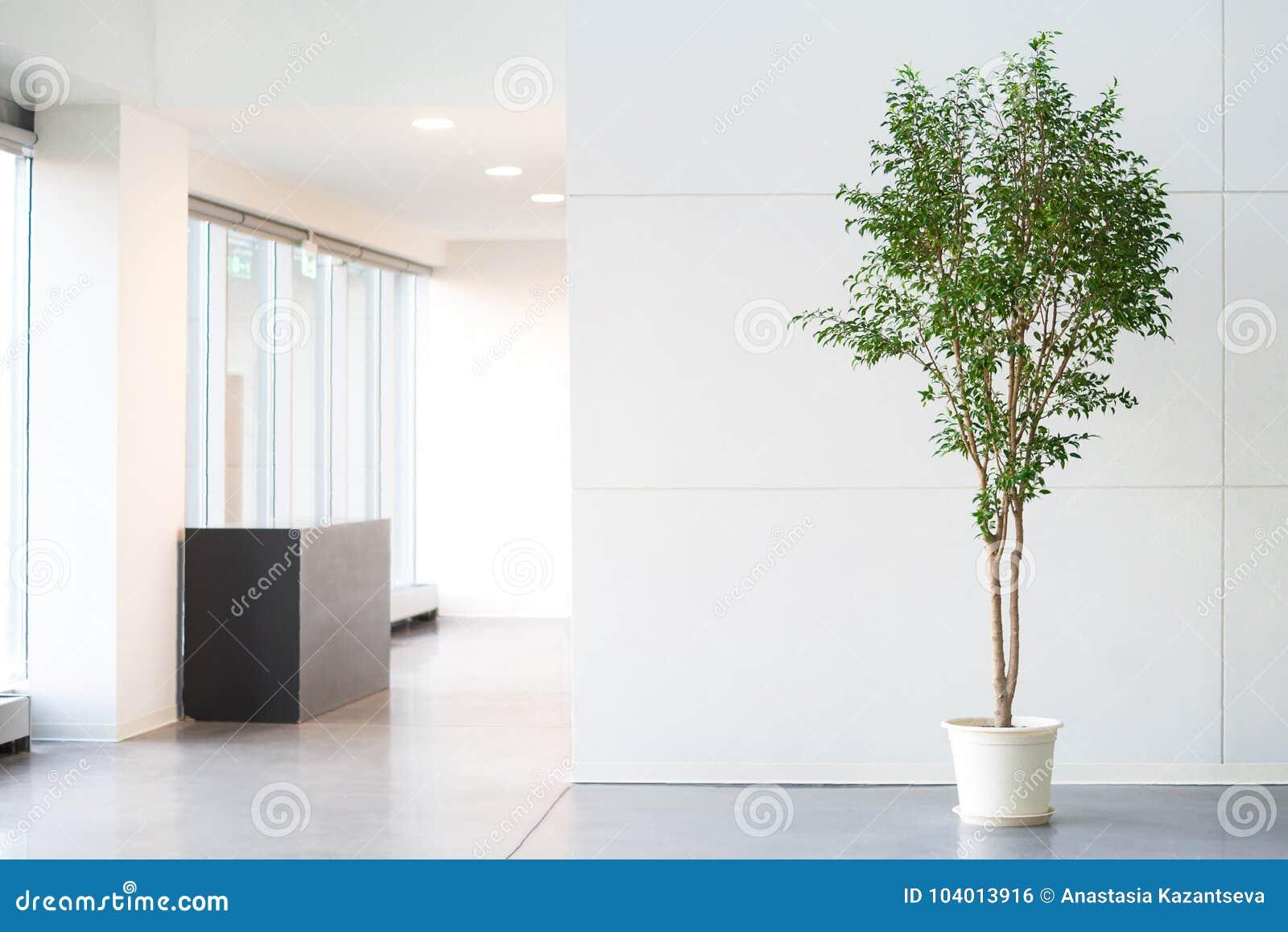 Bielu pusty biurowy pokój z zieloną rośliną