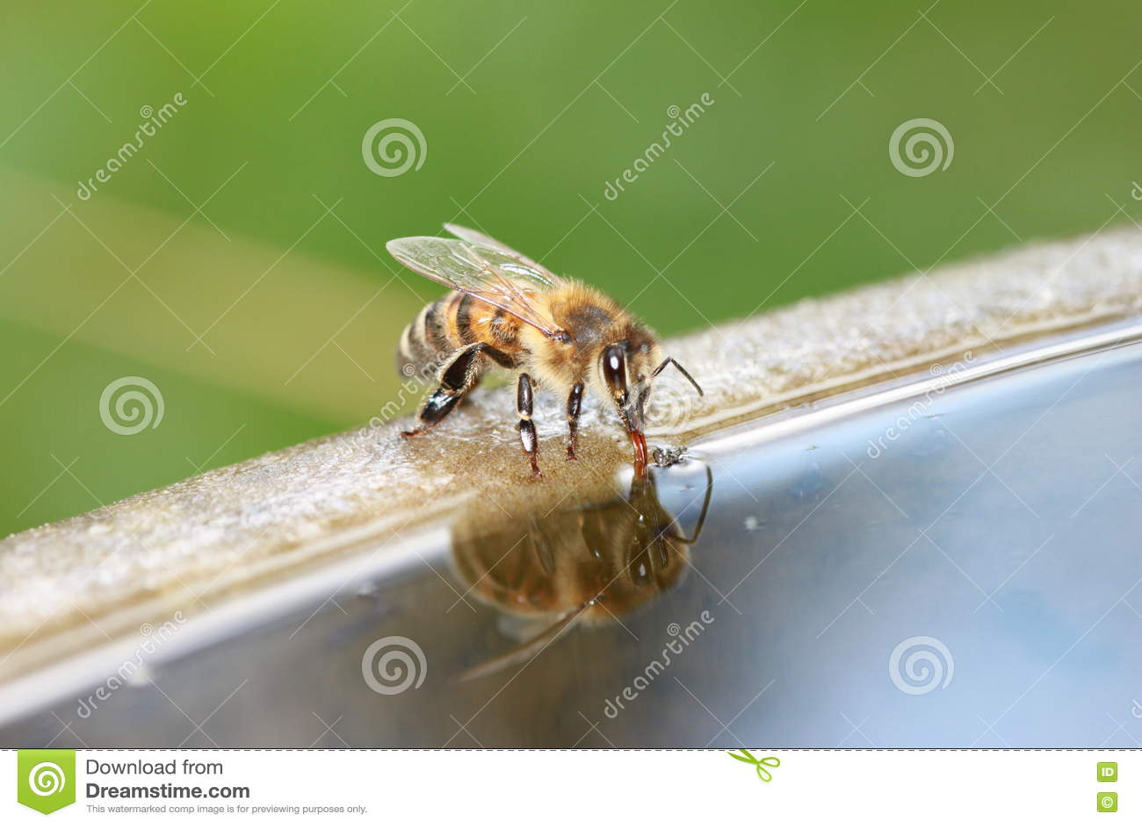 Biene ist Getränk