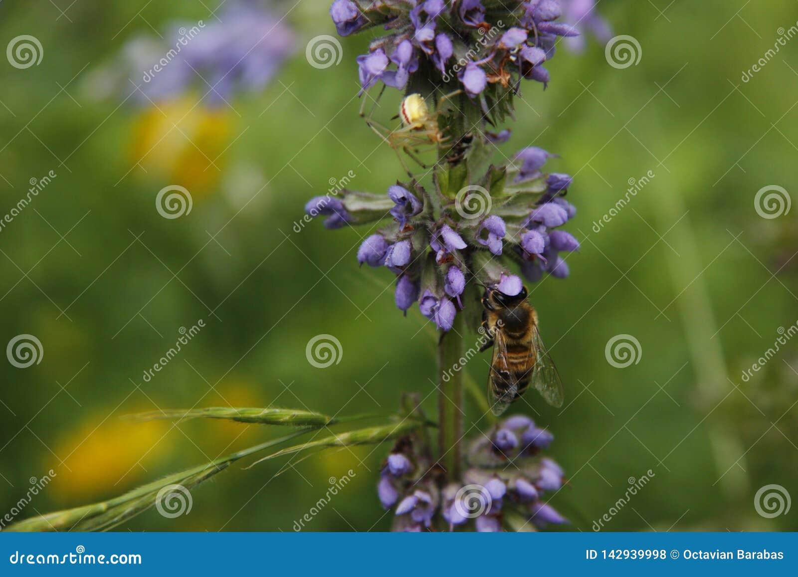 Biene und Spinne im Sommer im Garten auf Blumenstiel
