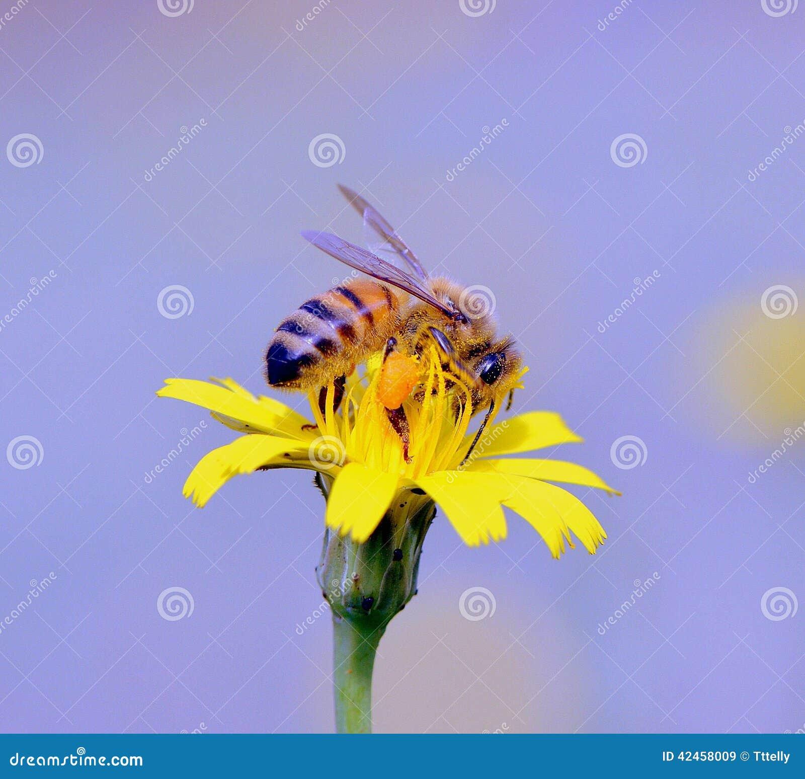 Bienen-Arbeitskraft