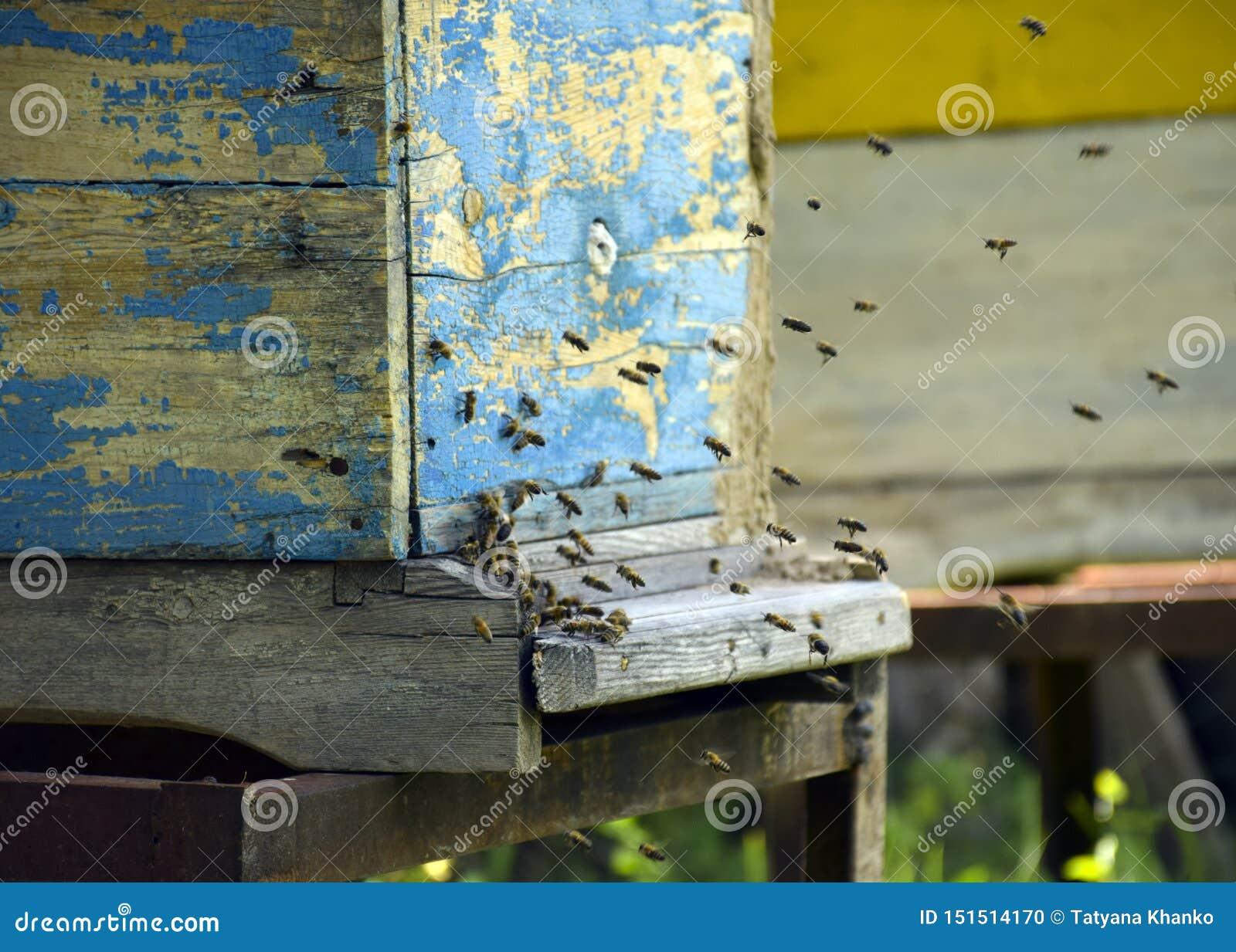 Bienen fliegen zum Bienenstock beekeeping Ein Schwarm von Bienen holt Honighaus apiary