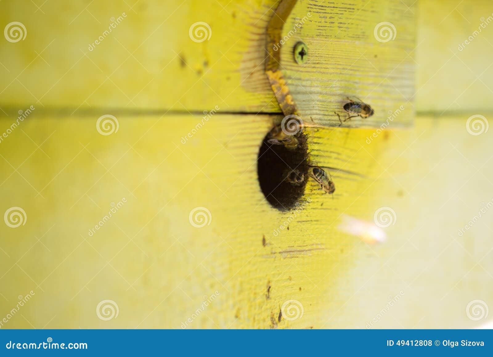 Download Bienen im Haus stockfoto. Bild von bienenstock, liebhaberei - 49412808