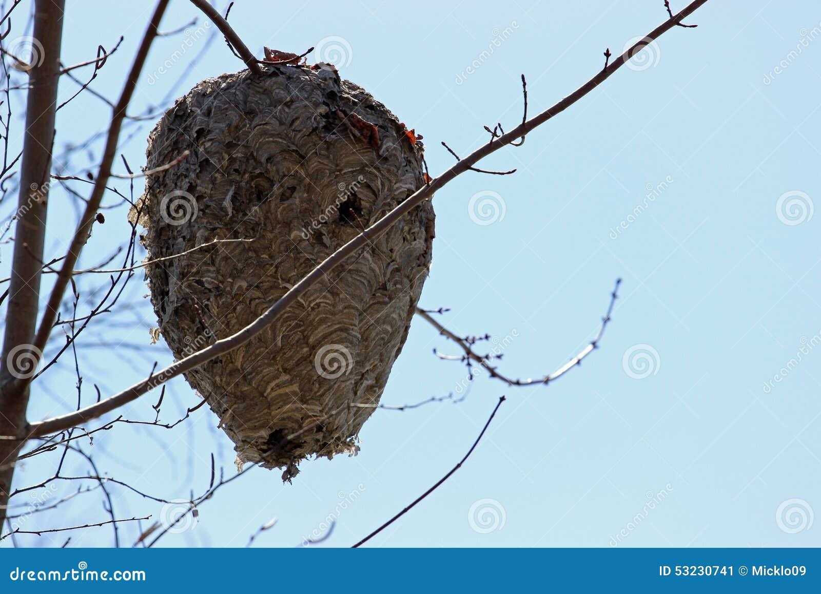bienen nest stockfoto bild 53230741. Black Bedroom Furniture Sets. Home Design Ideas