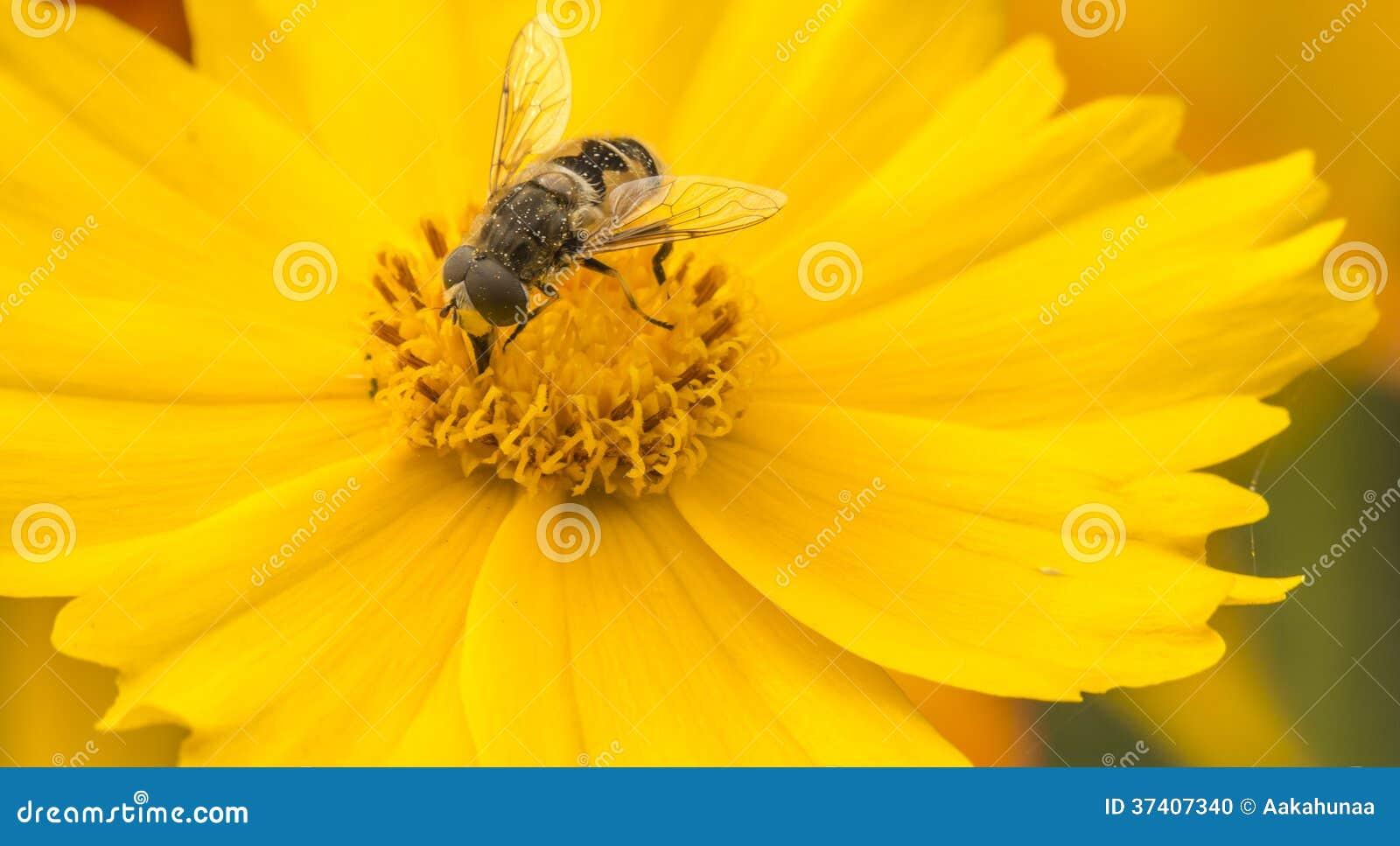 Bienen Und Blumen