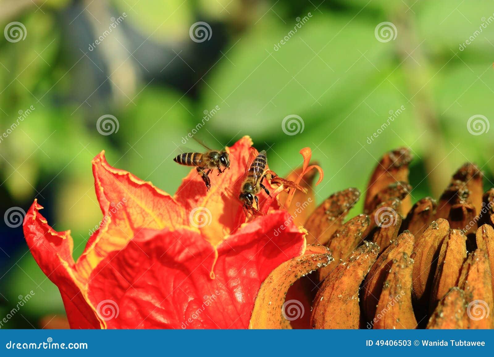 Download Bienen Und Blumen Sind Schön Stockbild - Bild von blume, frisch: 49406503