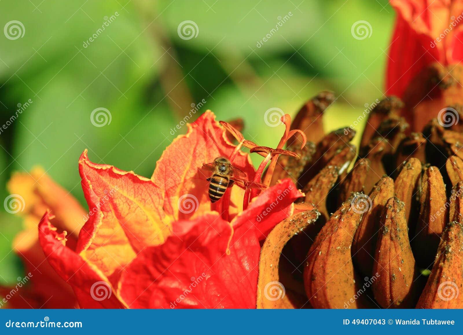 Download Bienen Und Blumen Sind Schön Stockbild - Bild von fields, bunt: 49407043